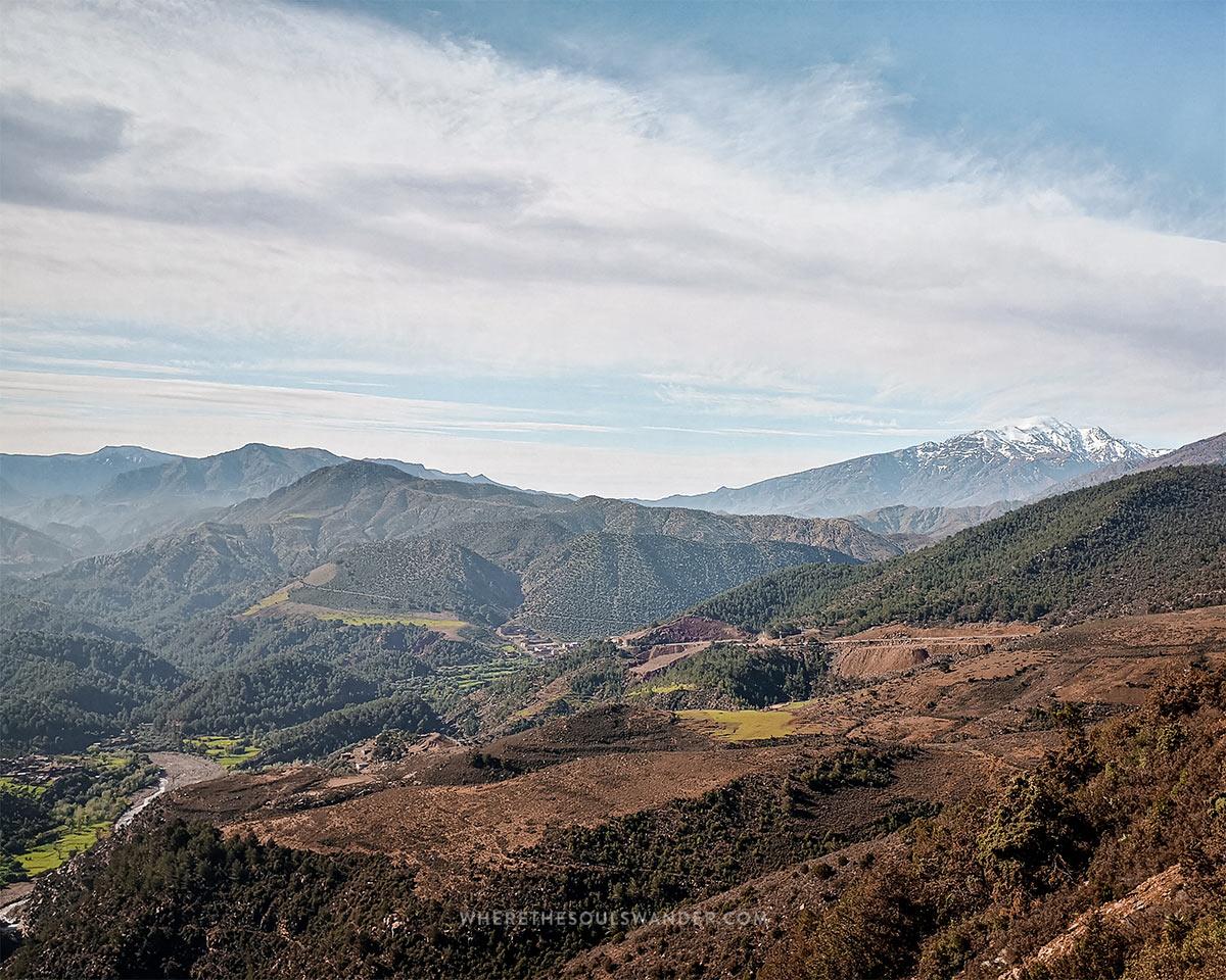 dynamic landscapes