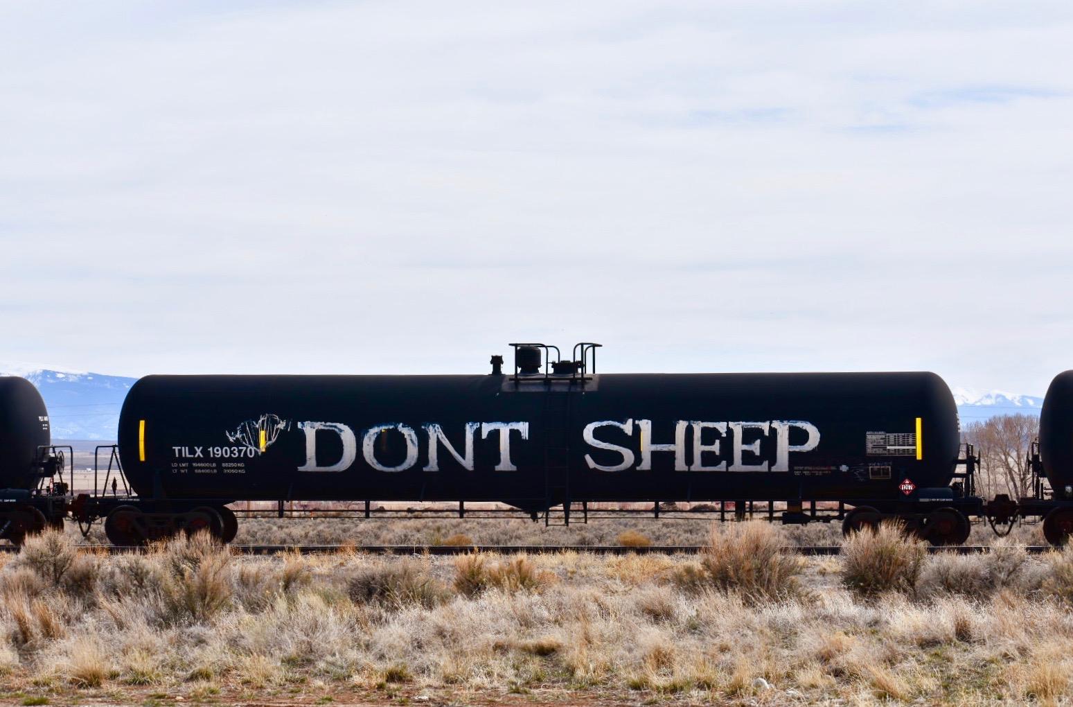 Don't Sheep,  near Monte Vista, CO