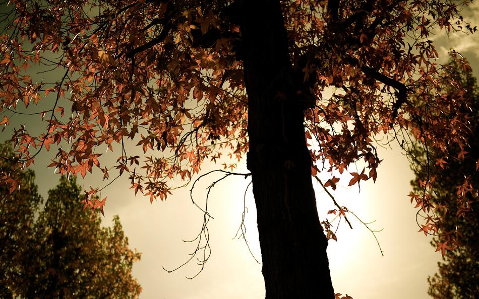 tree_wp.jpg
