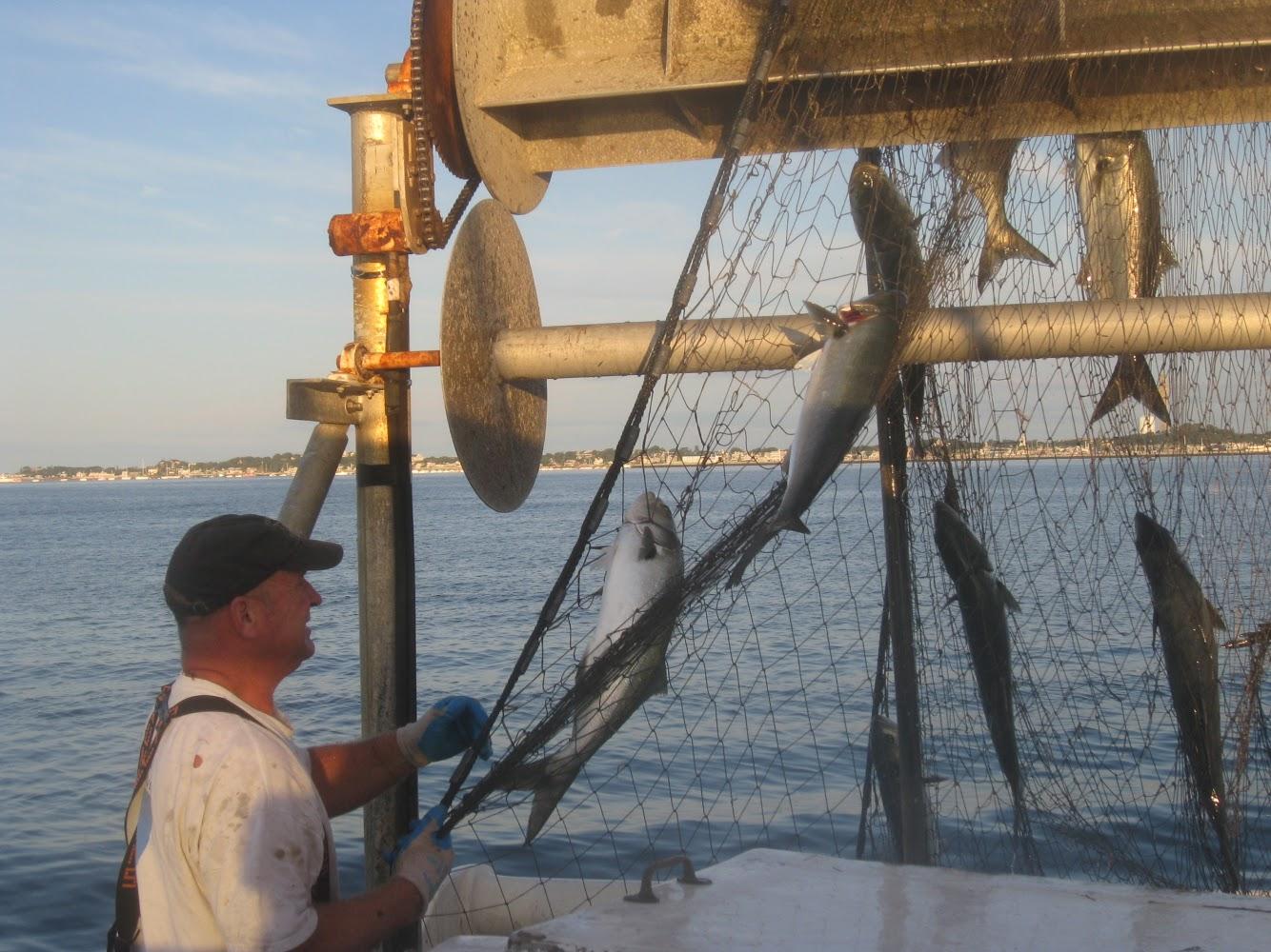 F/V: Sea Wolf hauling net full of bluefish