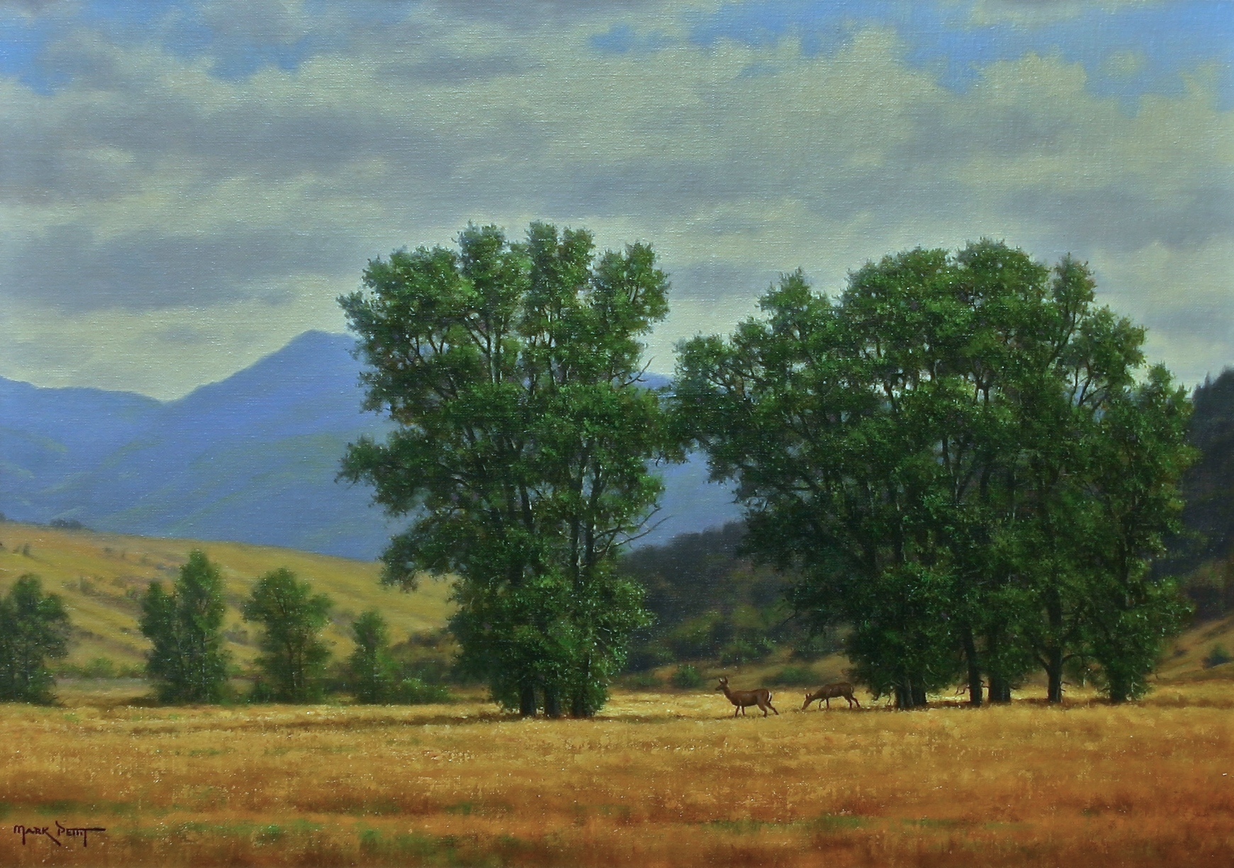 "Golden Meadow | 17"" x 24"" 
