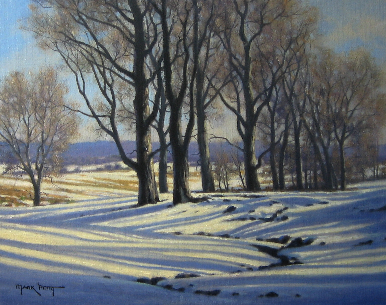 "Tree Shadows | 11"" x 14"" 