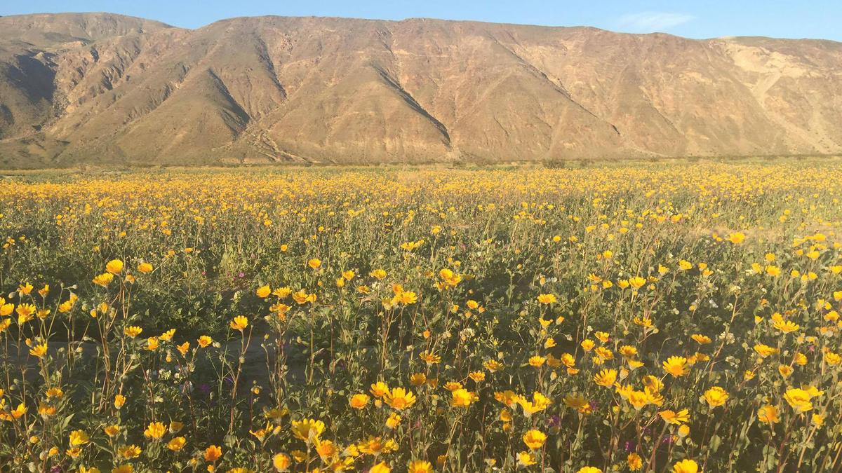 3-12-17-Henderson+Canyon+Anza+Borrego+Desert+State+park+j+kaur.jpg