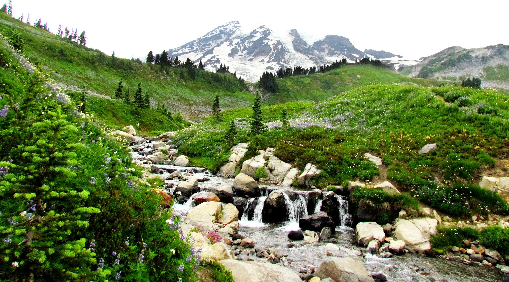 mount rainer national park.jpg