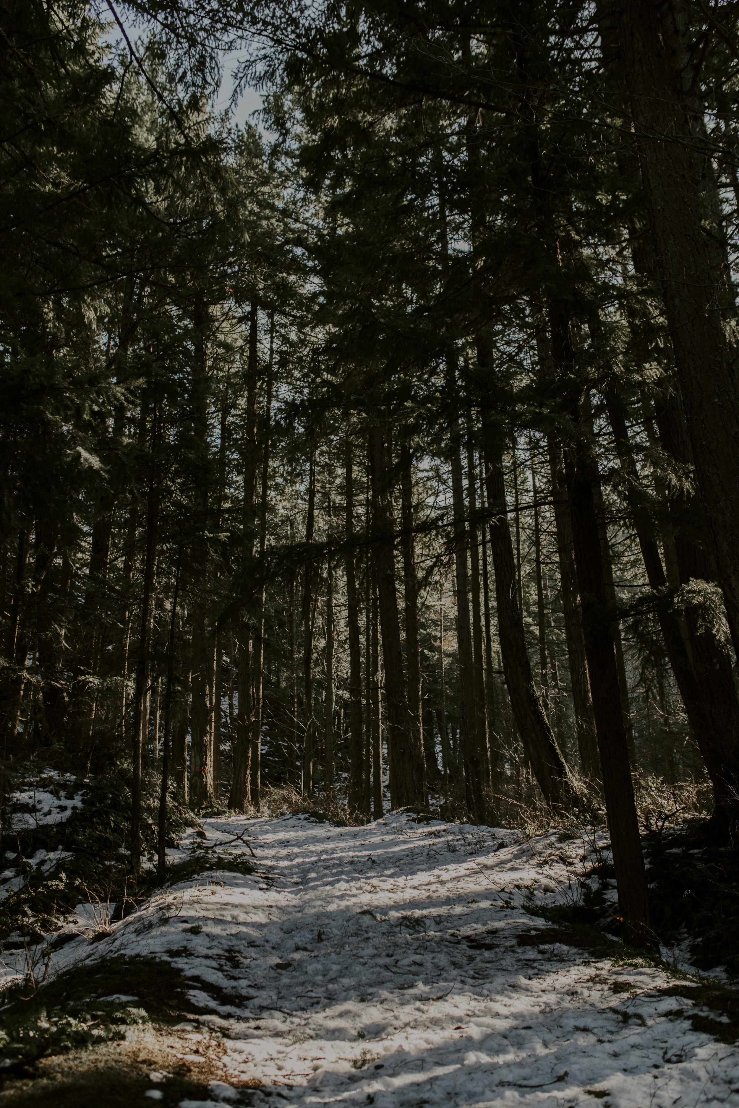 forest3_1.jpg