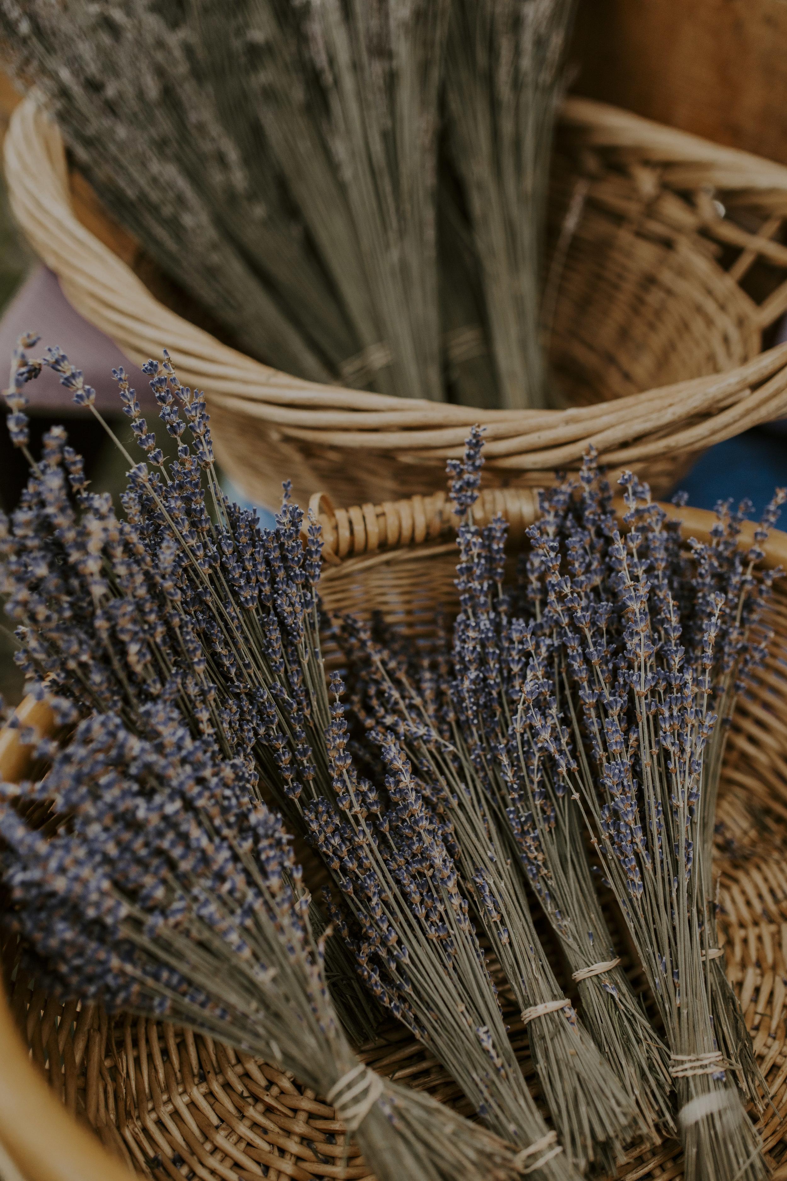 lavender3_1.jpg