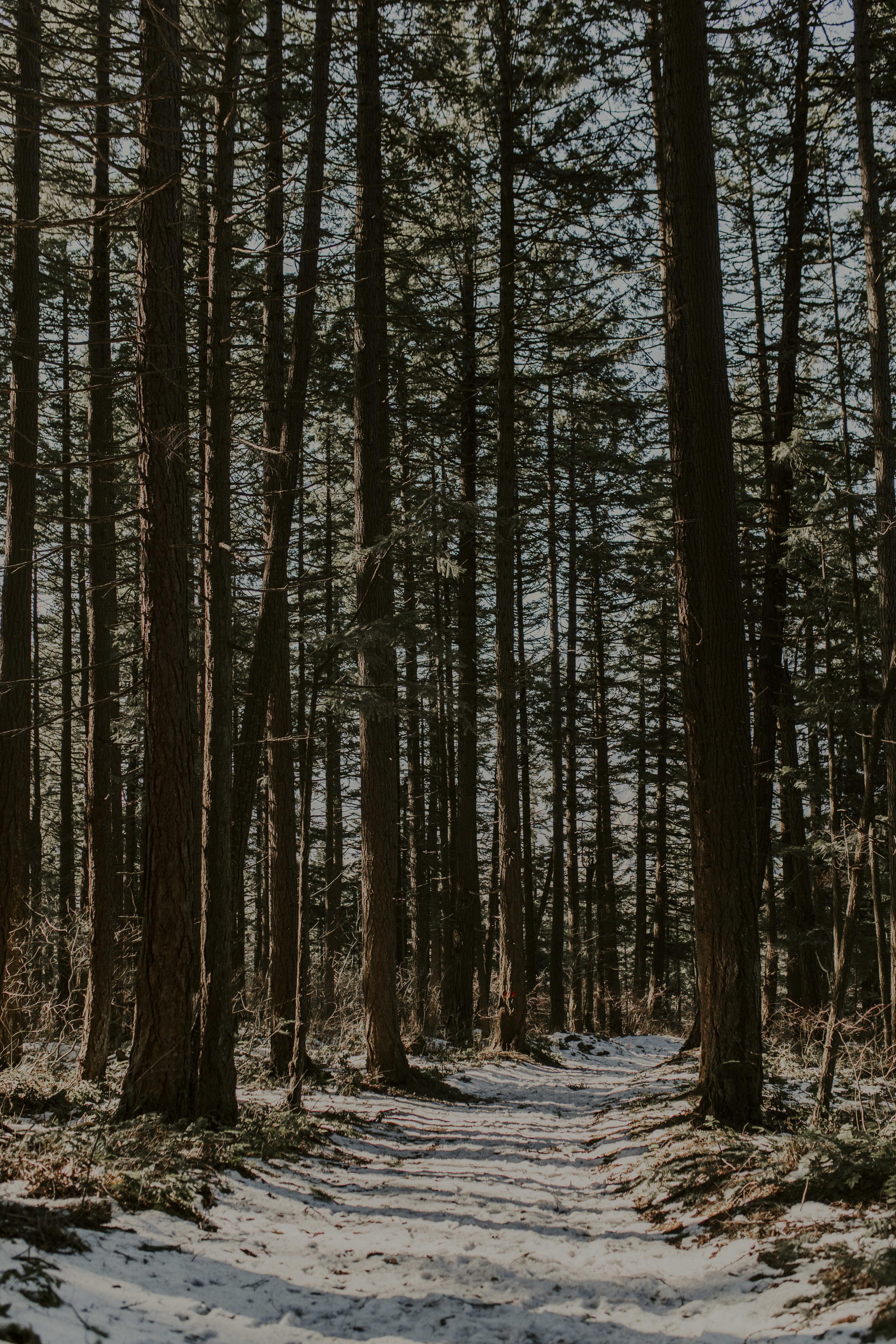 forest8_1.jpg