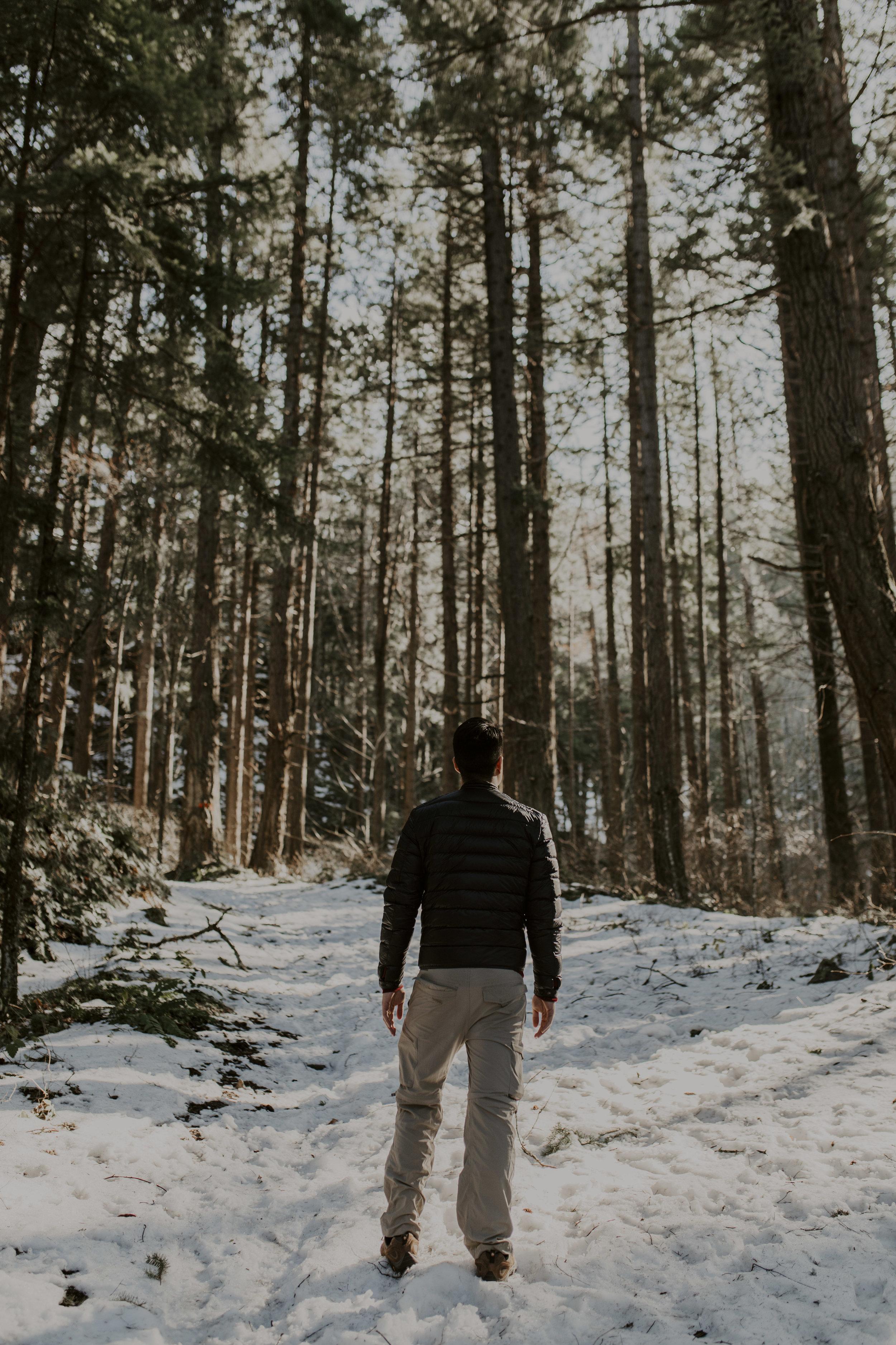 forest5_1.jpg