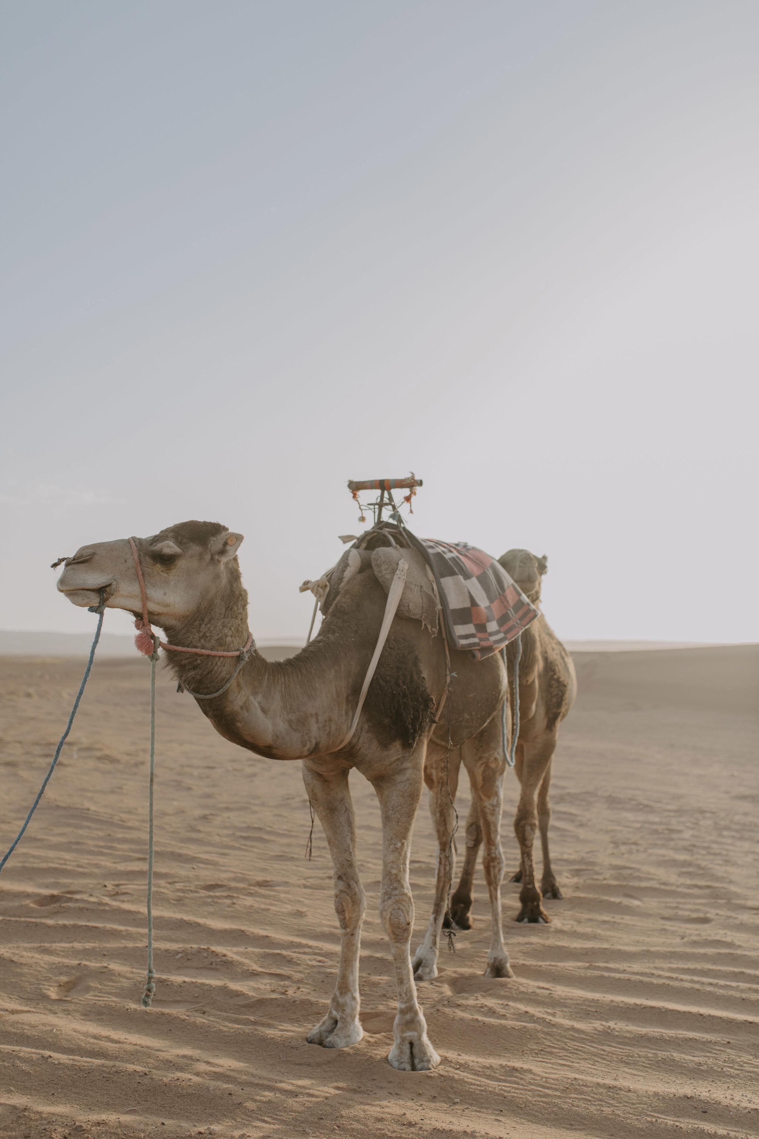 desert 46.jpg