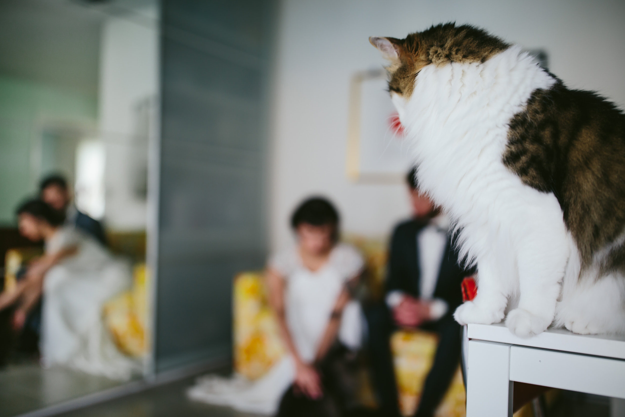 bride_and_groom_cats_in_home_session_wedding_fort_lauderdale_photographer_steph_lynn_photo-12.jpg