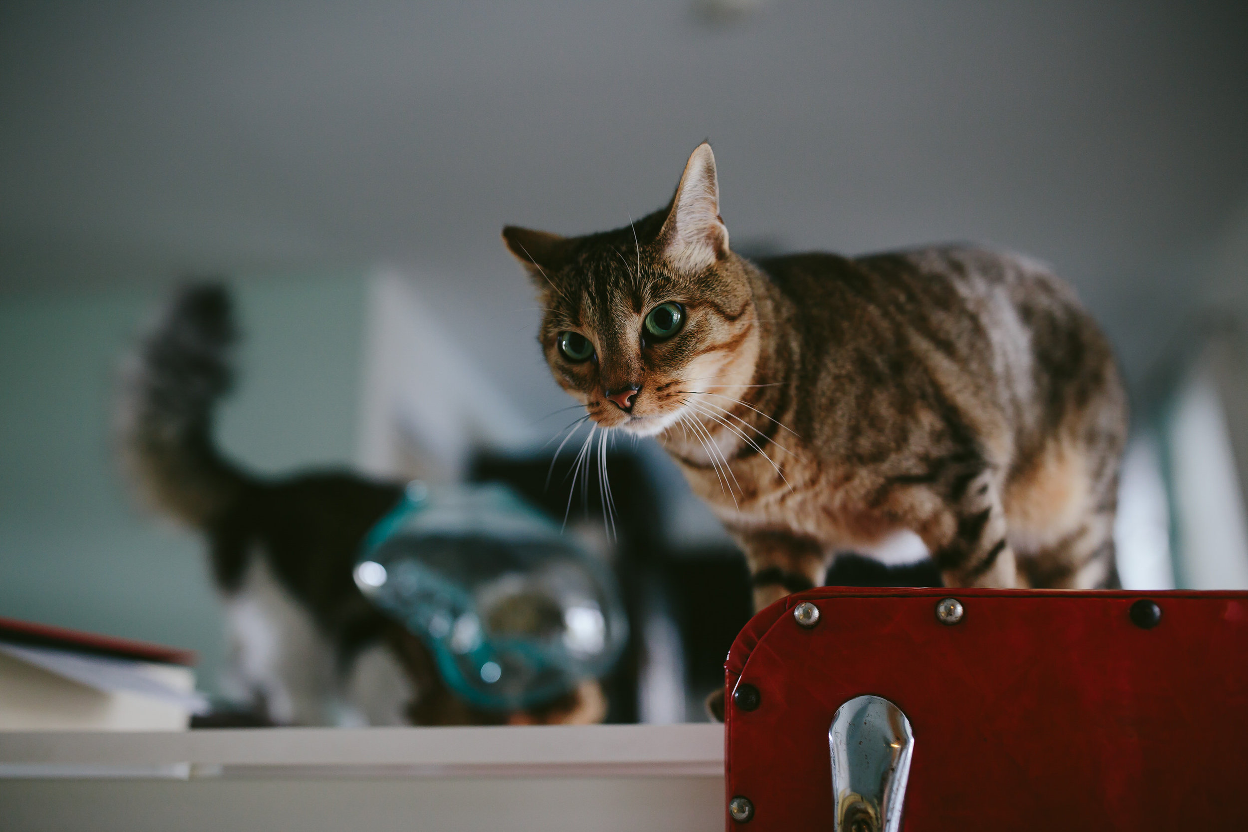 bride_and_groom_cats_in_home_session_wedding_fort_lauderdale_photographer_steph_lynn_photo-84.jpg