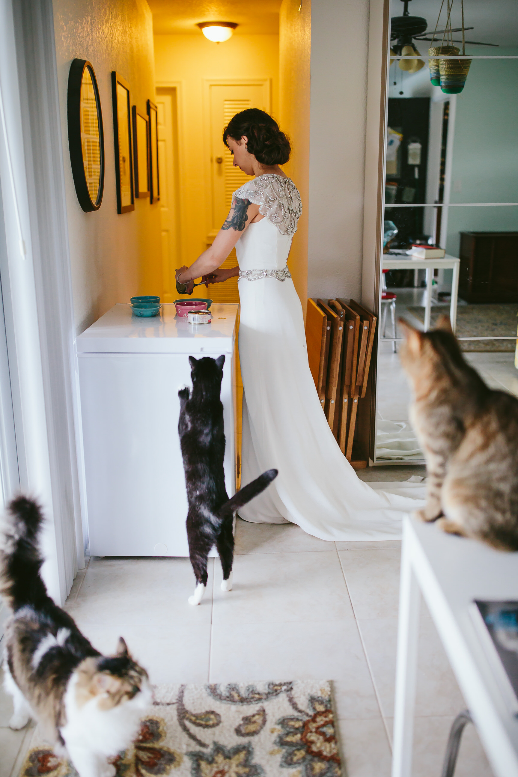 bride_and_groom_cats_in_home_session_wedding_fort_lauderdale_photographer_steph_lynn_photo-86.jpg