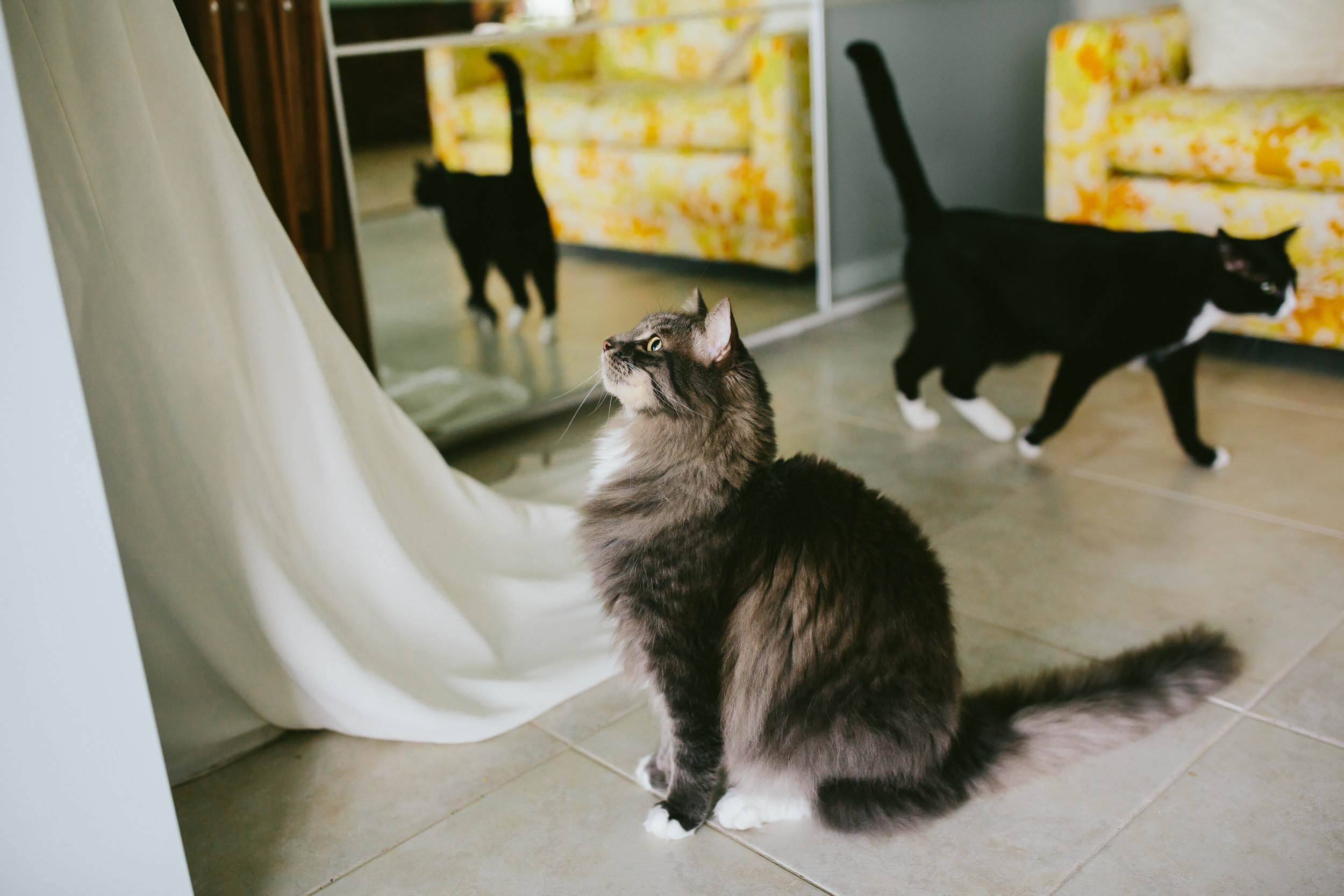 bride_and_groom_cats_in_home_session_wedding_fort_lauderdale_photographer_steph_lynn_photo-99.jpg