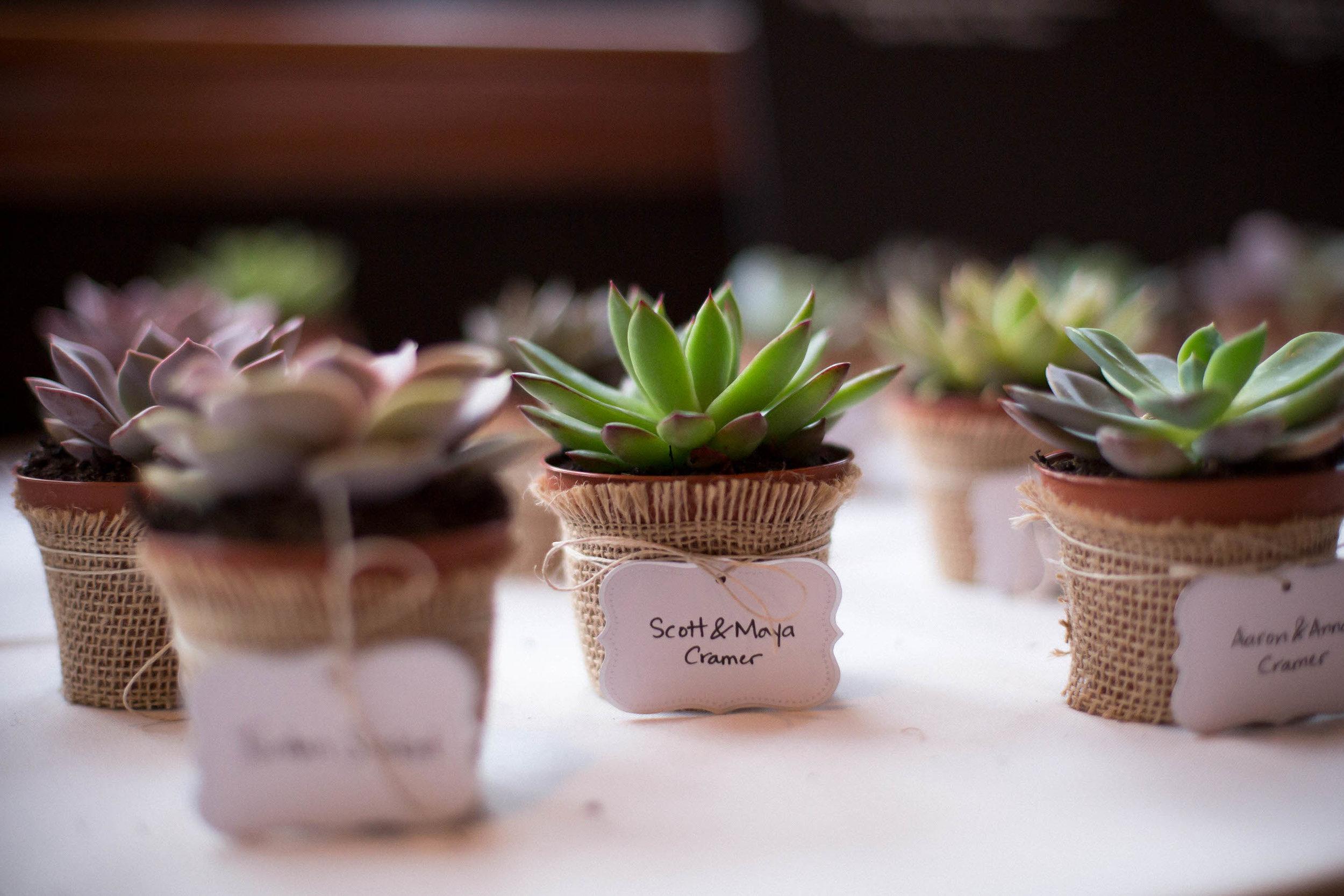 cactus-gifts-wedding-ideas-tiny-house-photo.jpg