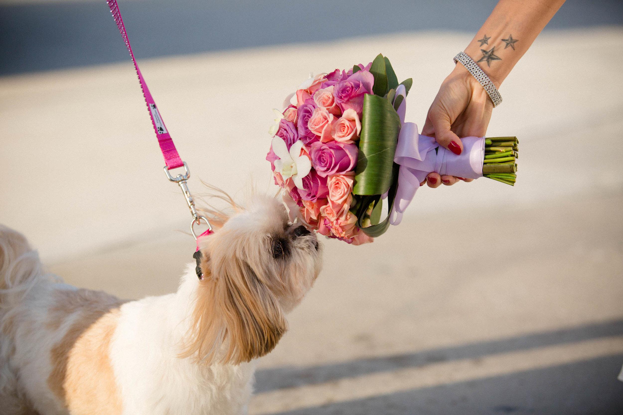dog_wedding_bouquet_destination_photography_tiny_house_photo.jpg