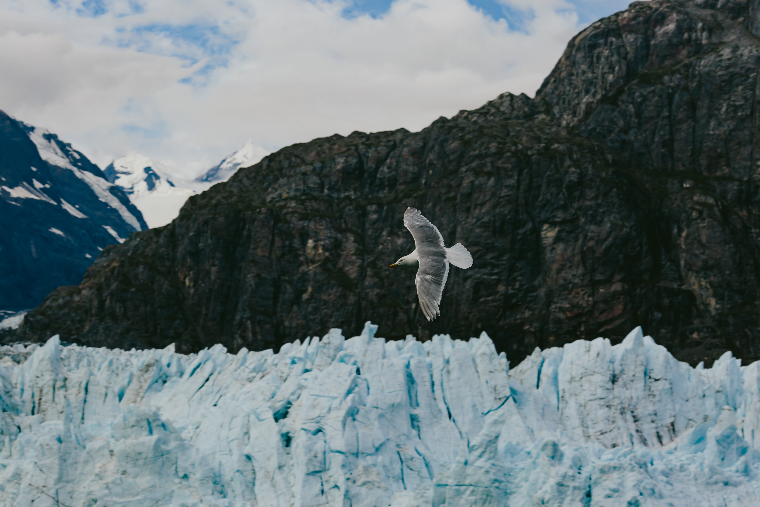 cruise-day-5 glacier bay-12.jpg