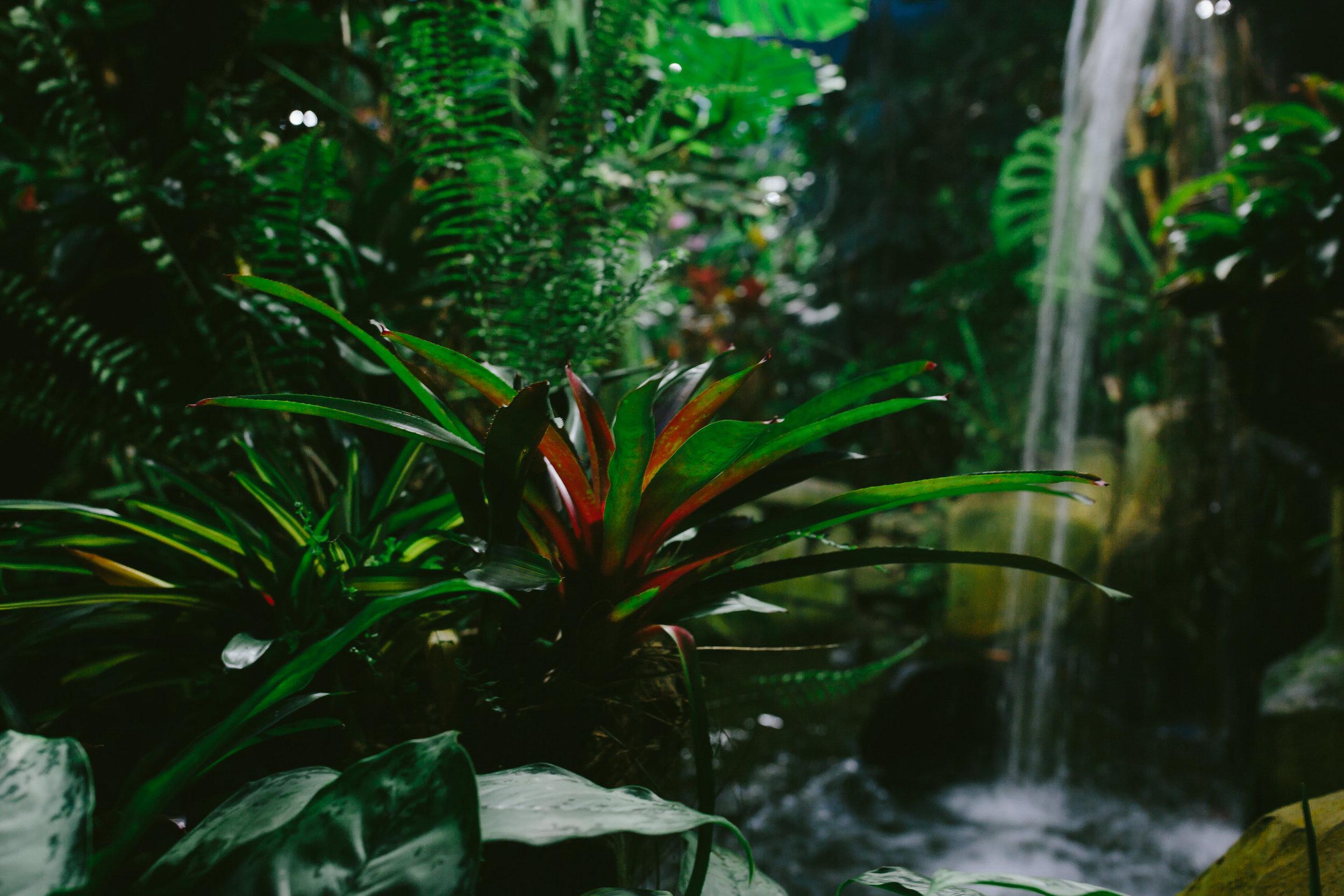 cruise day 7 butterfly garden-9.jpg