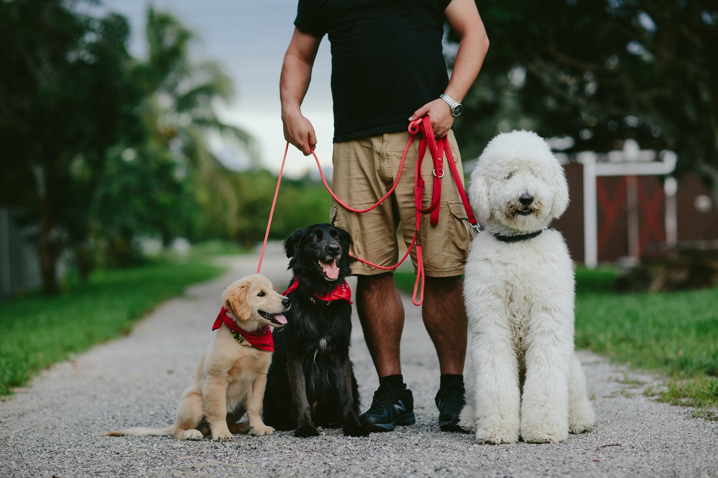 meyer-family-pet-portraits-154.jpg