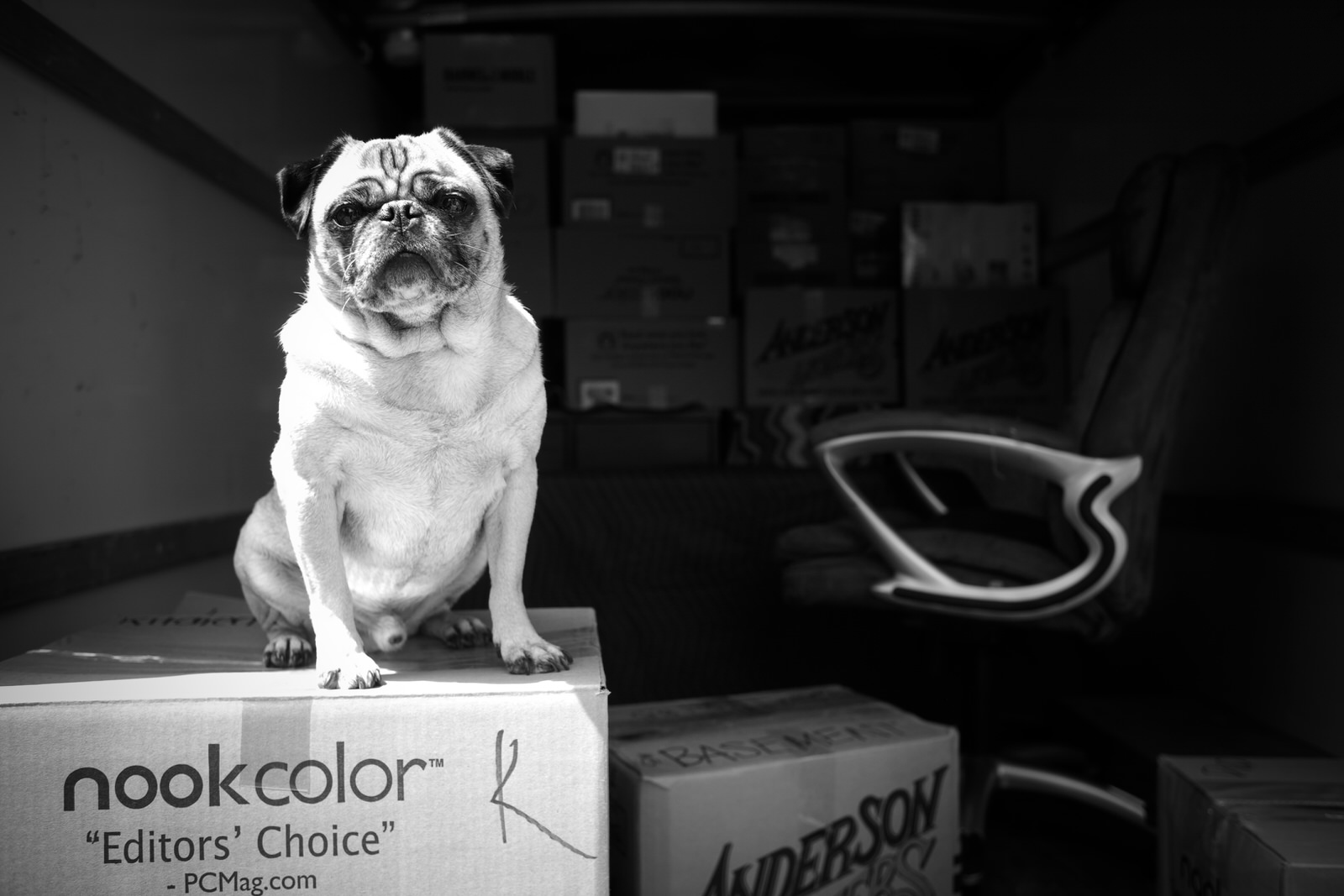 moving_from_new_york_to_florida_pug_on_moving_box.jpg