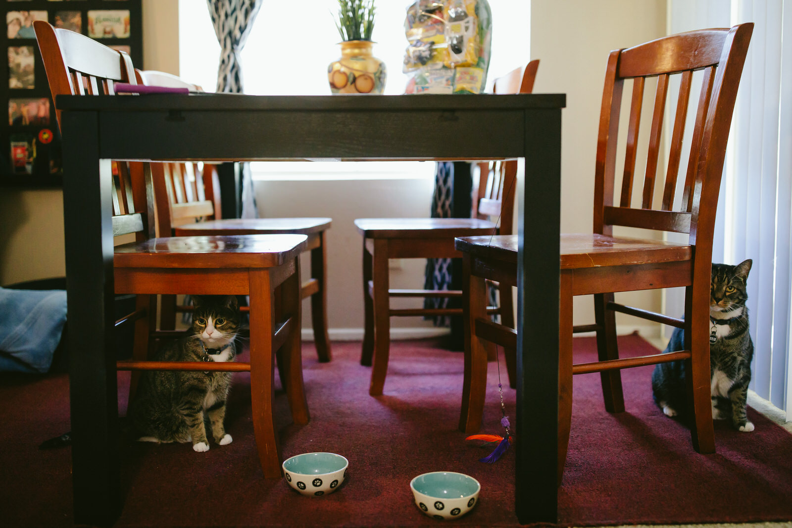orlando-engagement-session-epcot-day-in-the-life-home-cats-kitties-tiny-house-photo.jpg