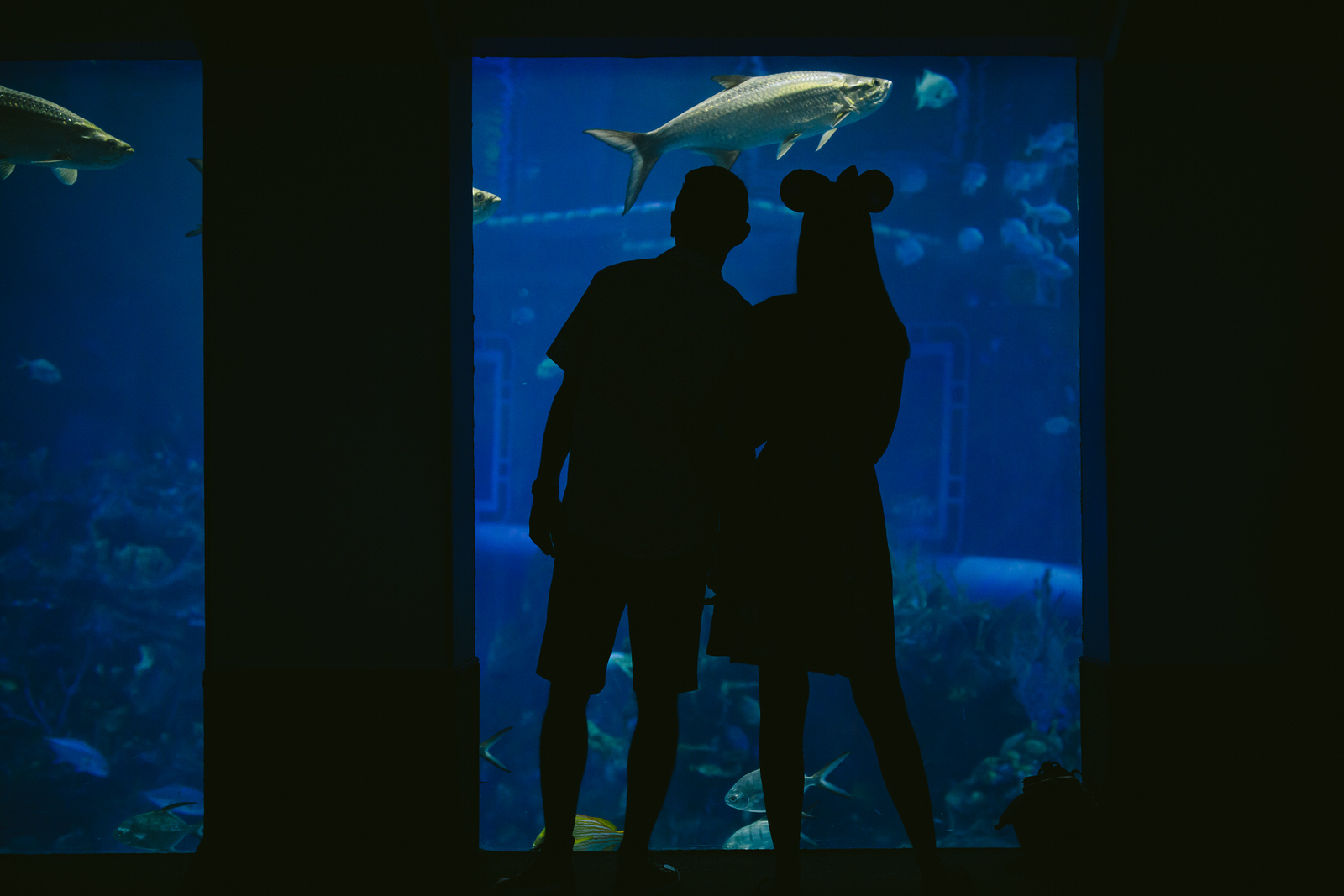 orlando-engagement-session-epcot-day-in-the-life-aquarium.jpg
