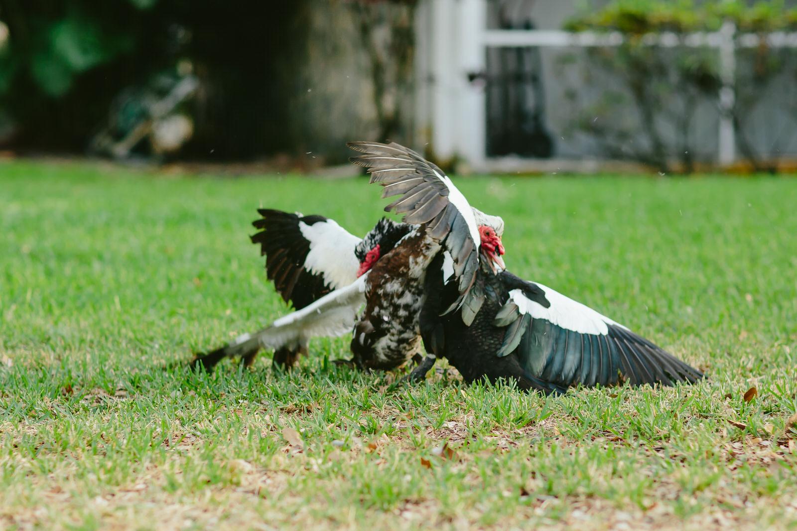florida-duck-brawl-tiny-house-photo.jpg