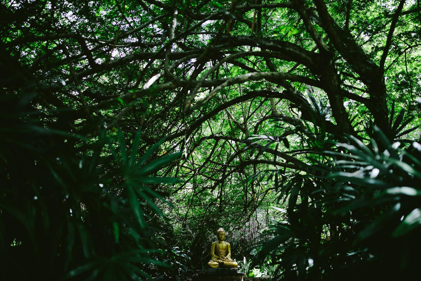 buddha-nature-kashi-ashram.jpg