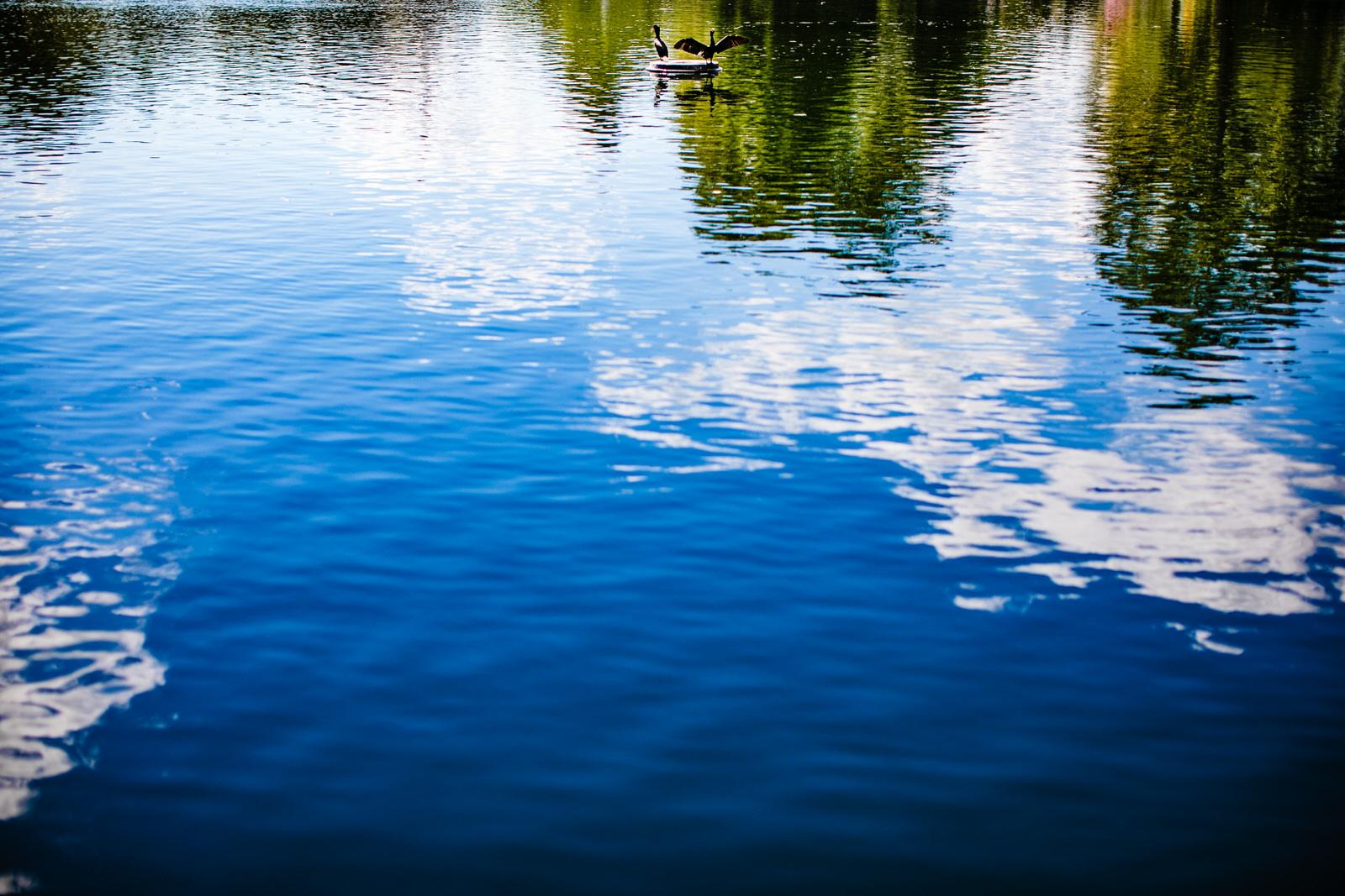 nature-tennessee-centennial-park-nashville-birds-blue-sky-reflections-lake.jpg