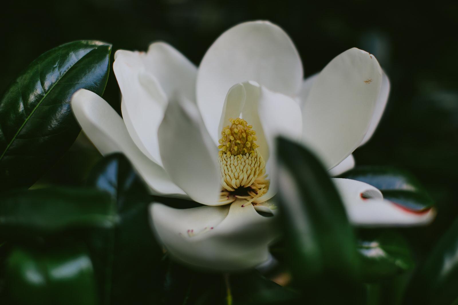 magnolia-tree-tiny-house-photo-nature-centennial-park-nashville.jpg