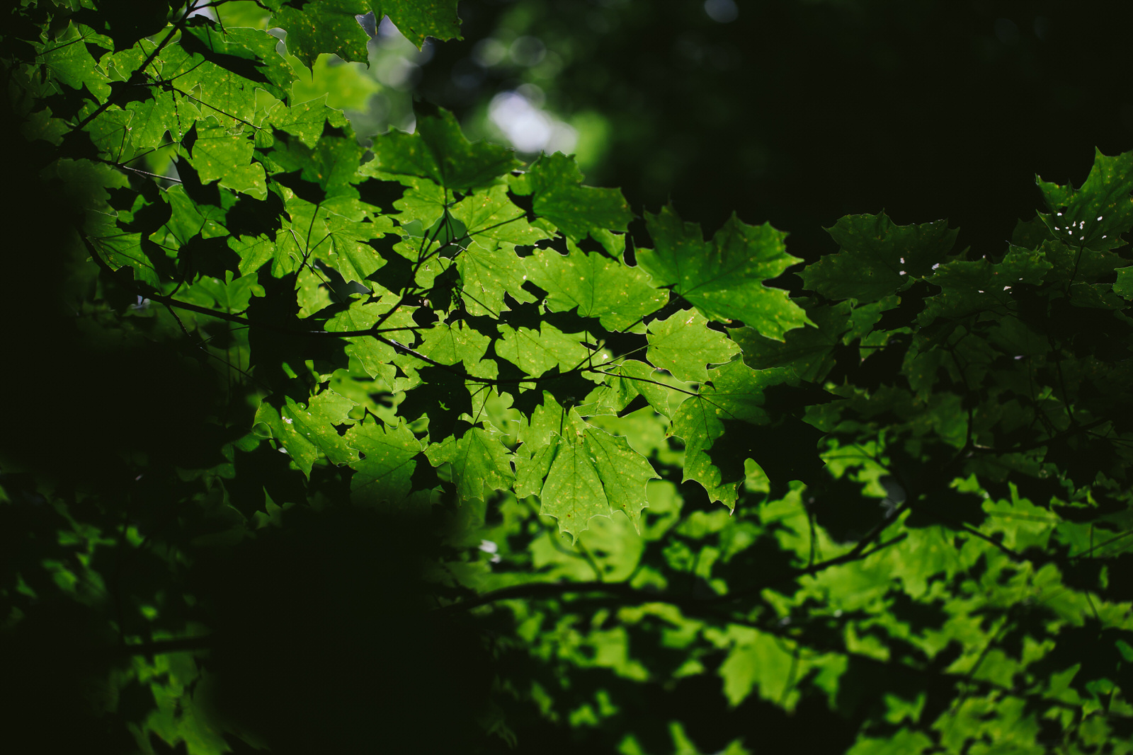 green-leaves-lake-radnor-tennessee-tiny-house-photo-travel-photography.jpg