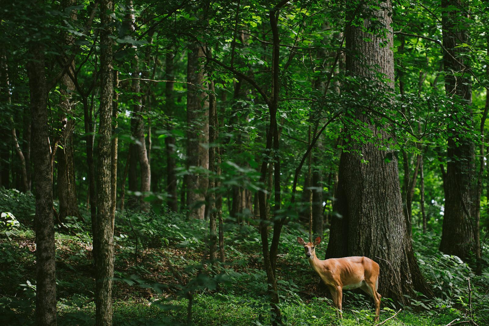 deer-hiking-tiny-house-photo-travel-tennessee.jpg