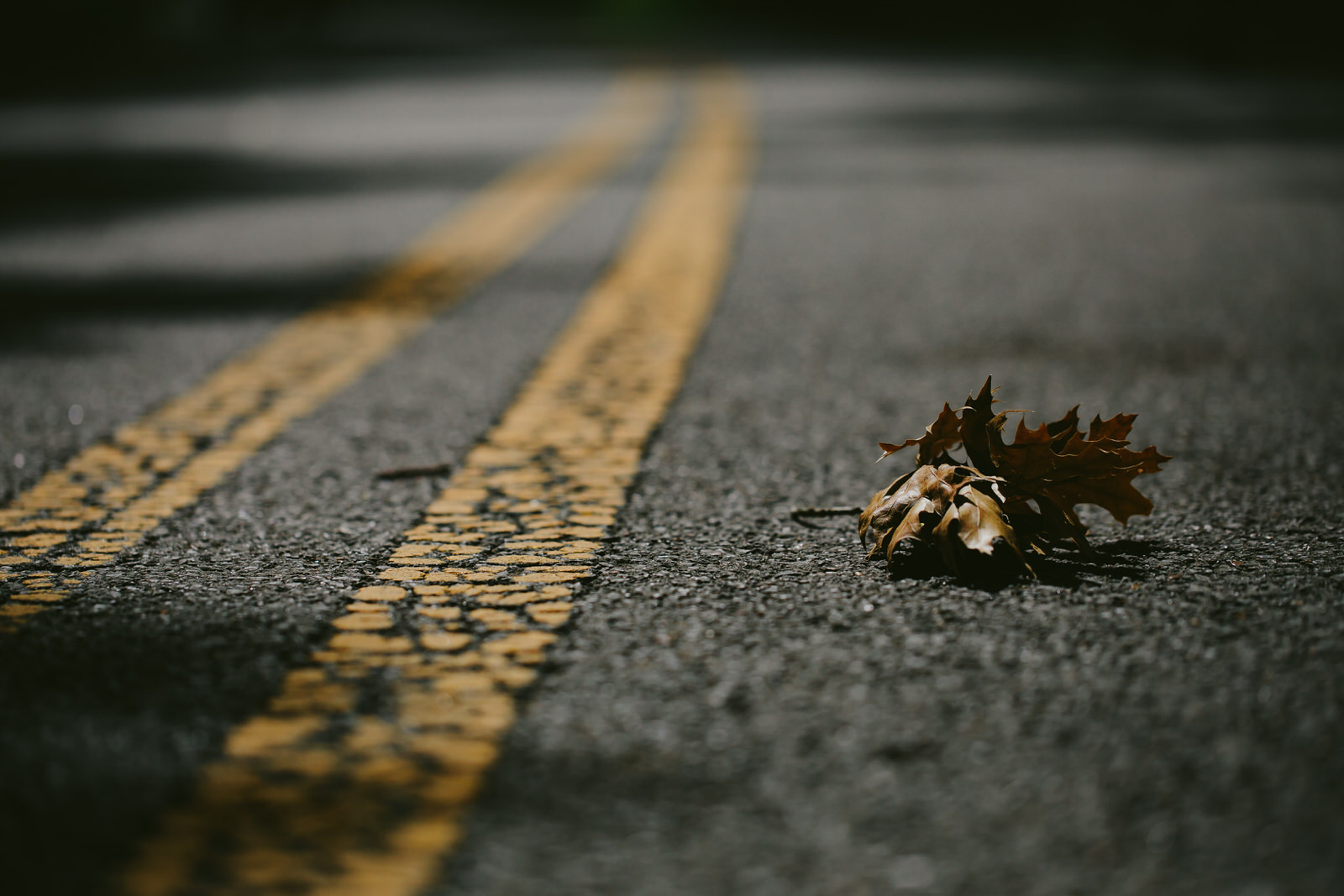 leaf-nature-hiking-tennessee-photography-road.jpg