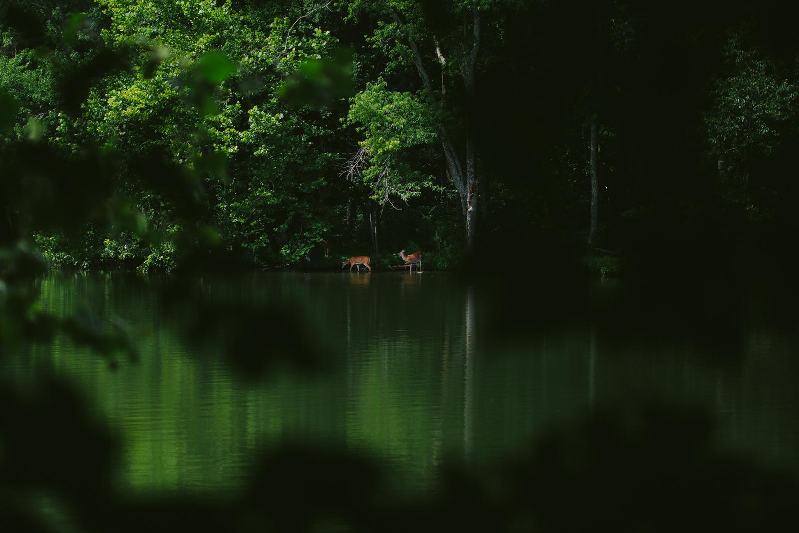 radnor-lake-deer-nature-hiking-tiny-house-photo.jpg
