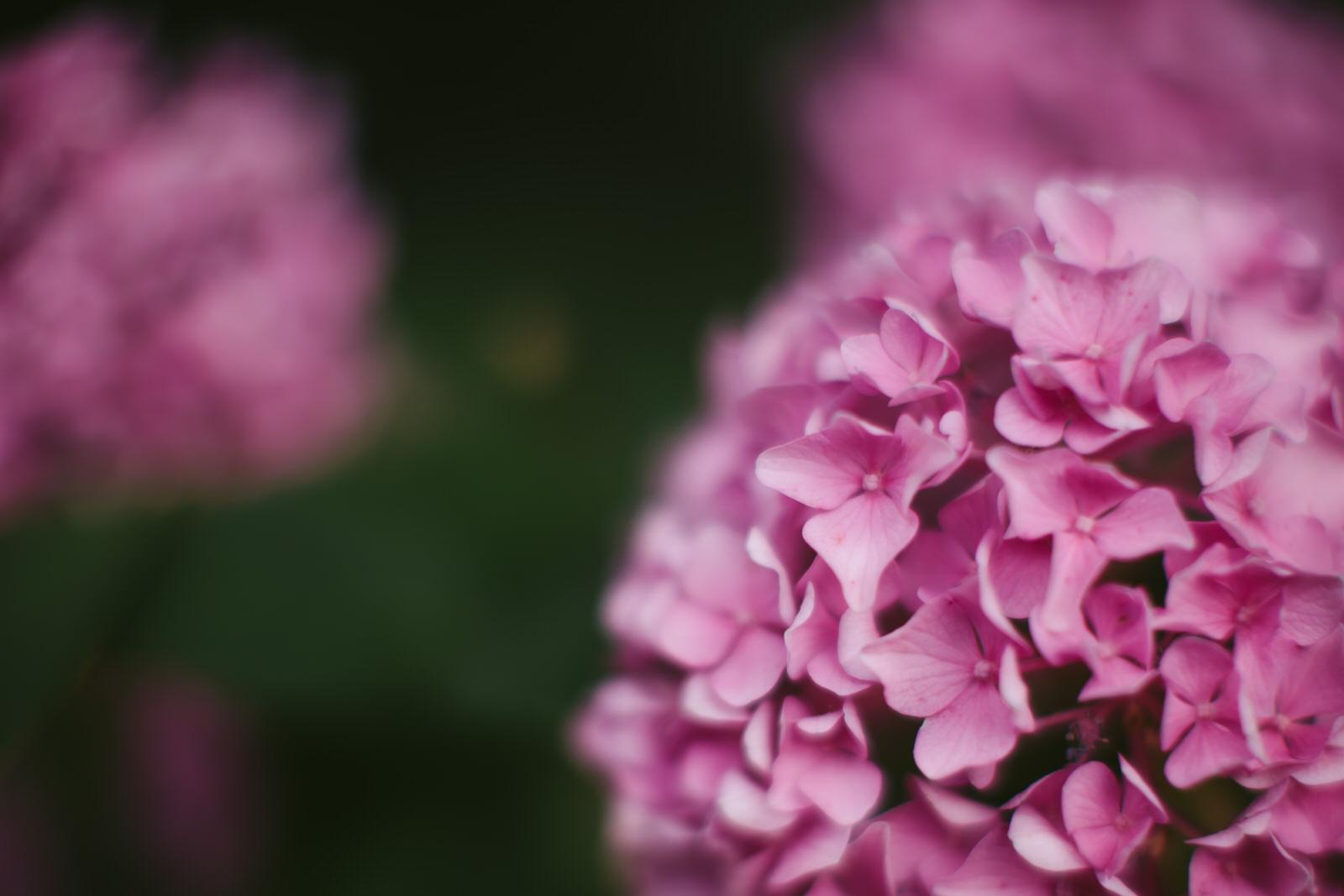 nashville-hydrangea-centennial-park-tiny-house-photo-nature.jpg