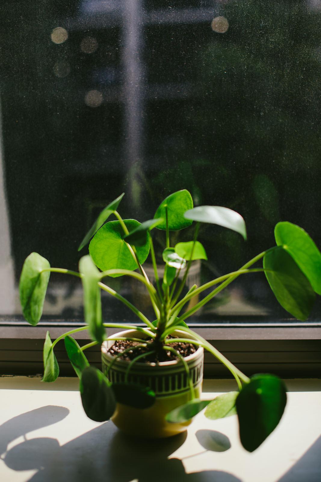 nashville-pilea-plant-nature-vacation-tiny-house-photo.jpg