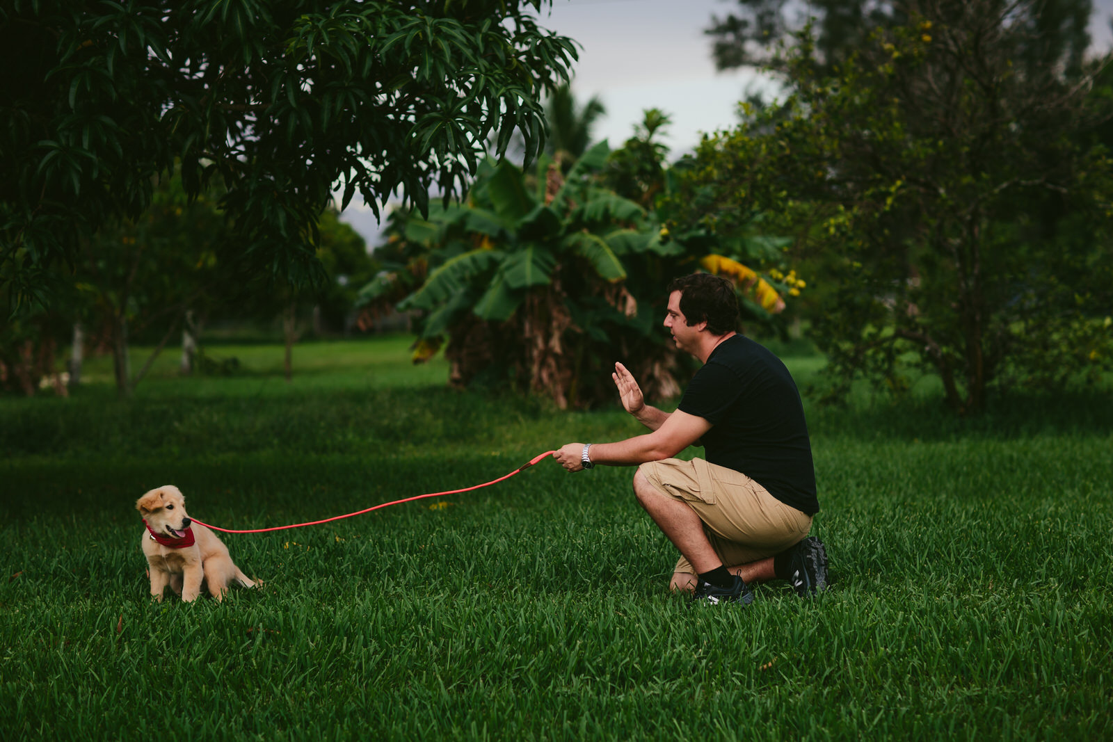 Dog Obedience Training Session