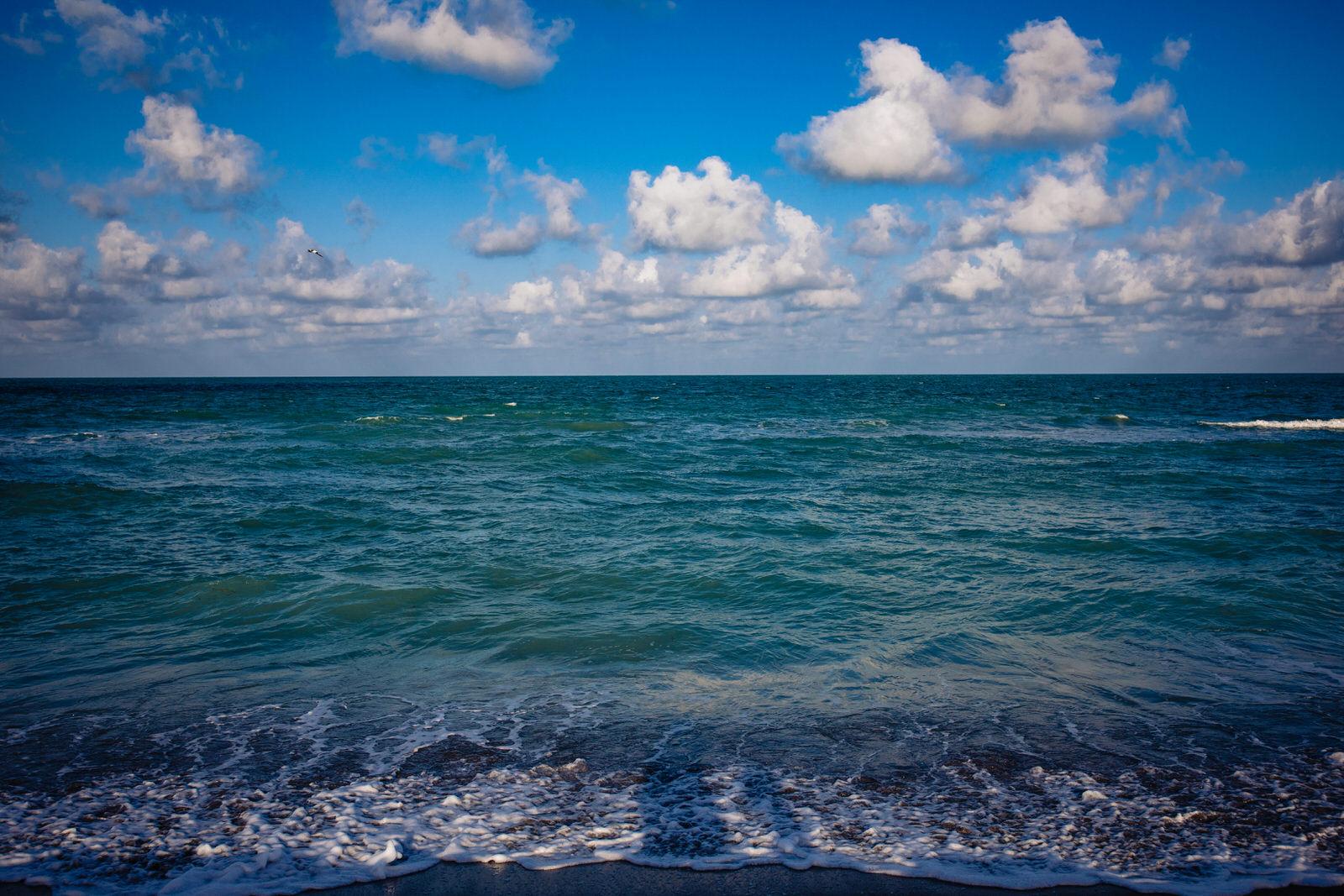 siesta-key-florida-tiny-house-photo-vacation-beach-nature-macro-15.jpg
