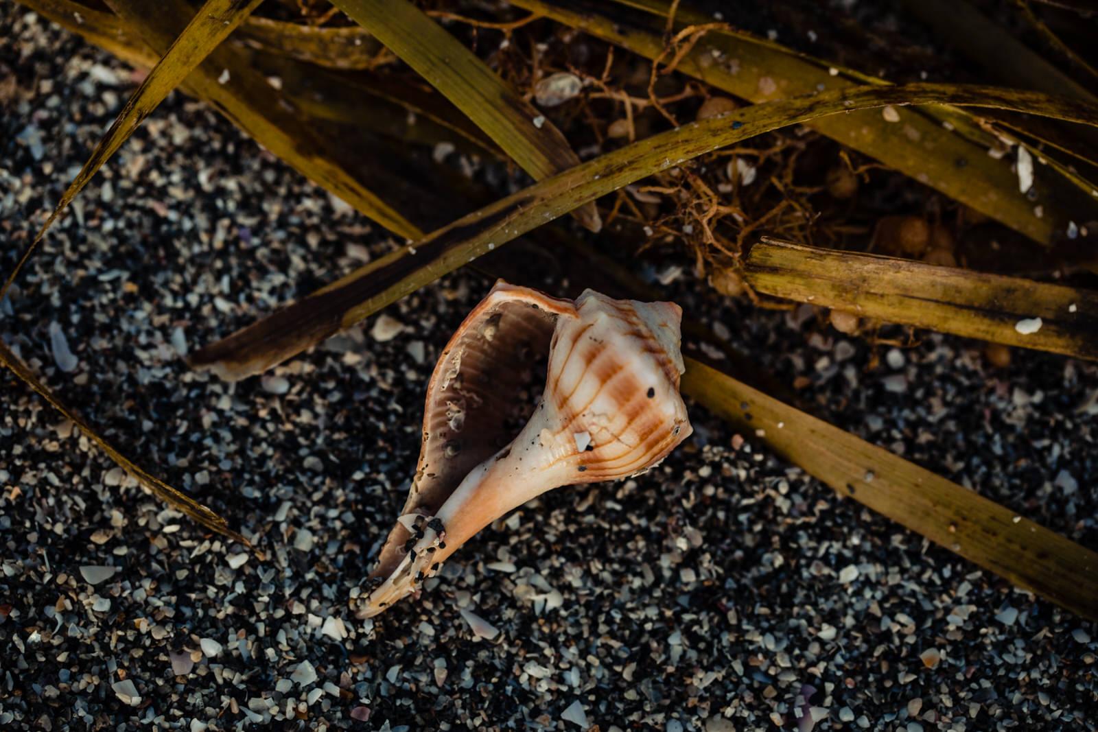 siesta-key-florida-tiny-house-photo-vacation-beach-nature-macro-19.jpg