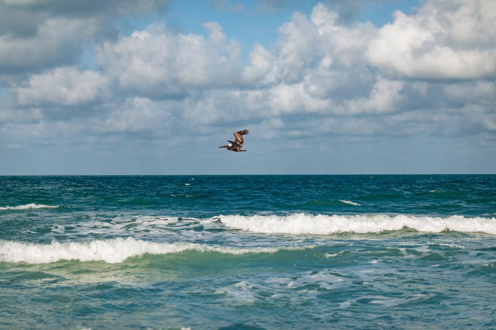 siesta-key-florida-tiny-house-photo-vacation-beach-nature-macro-22.jpg