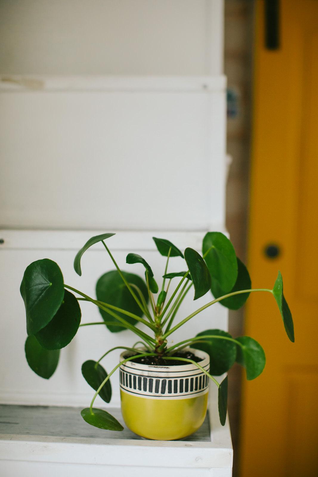 pilea_Plant_Tiny_House_Photo_Siesta_Keyjpg