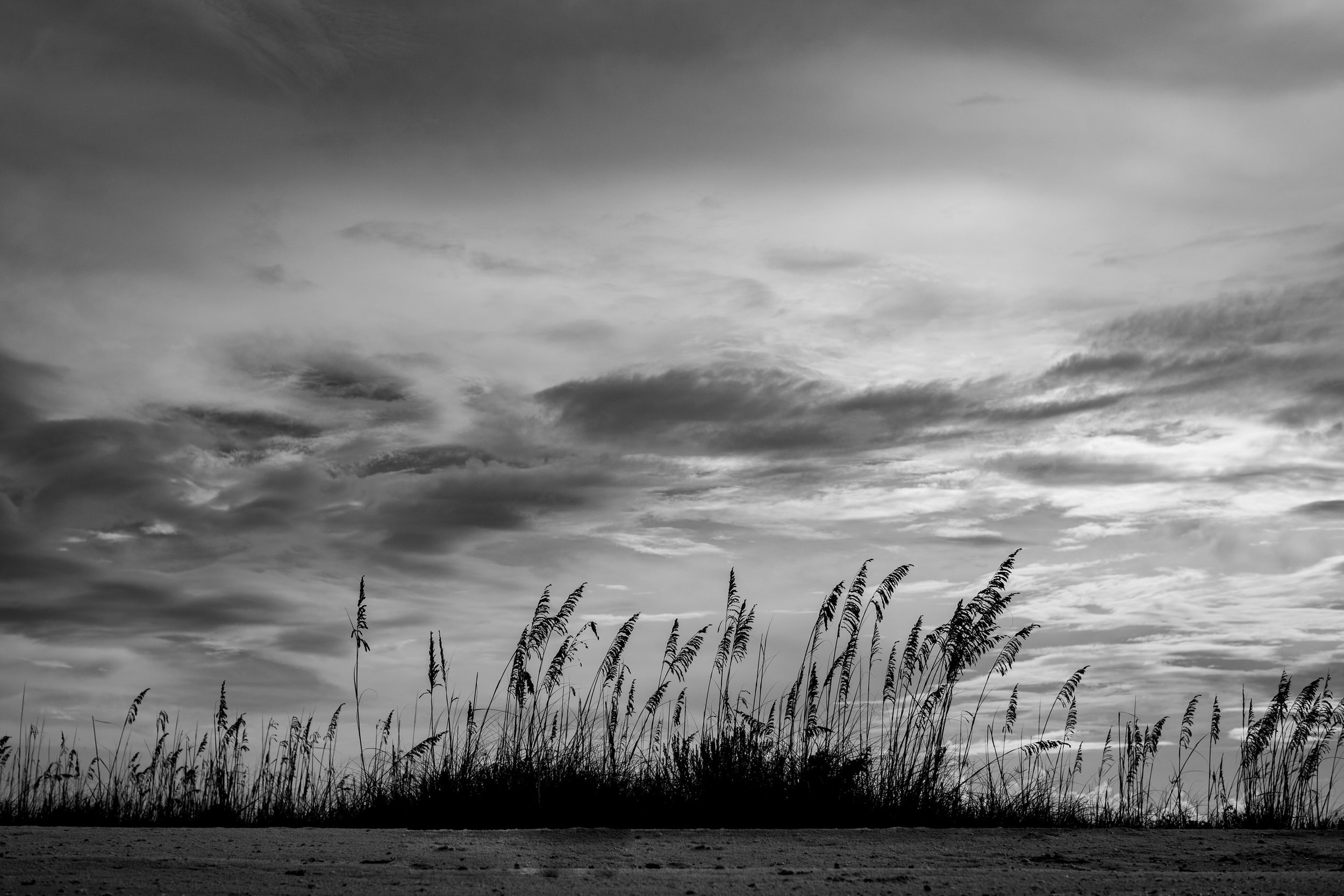 black and white nature photography naples florida