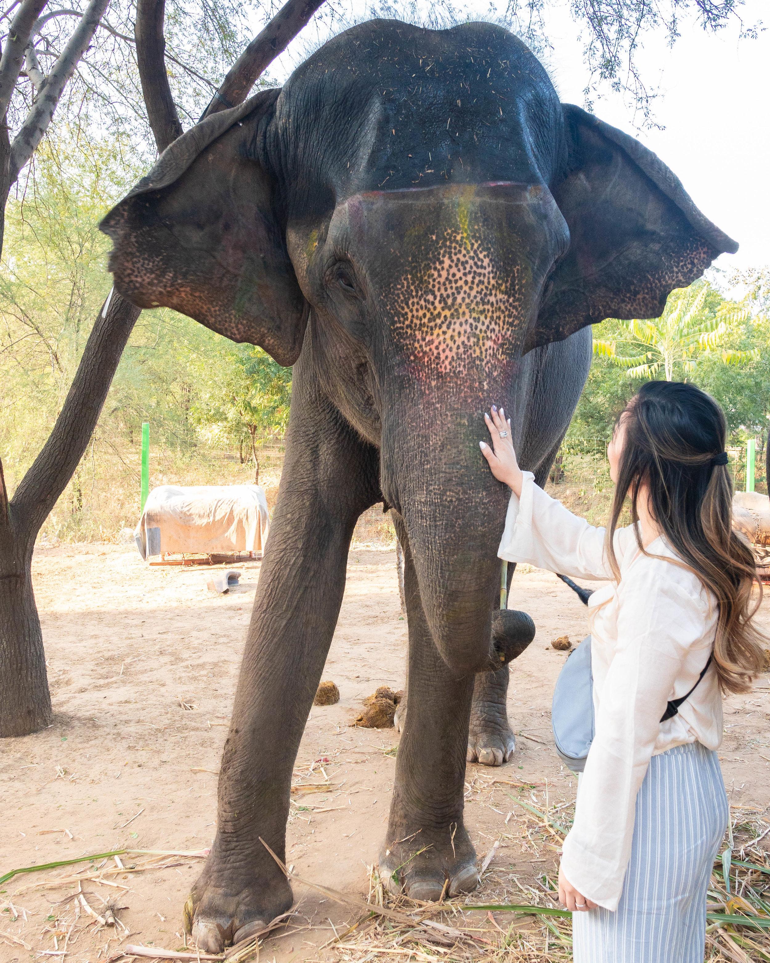Elejungle Elephant Safari
