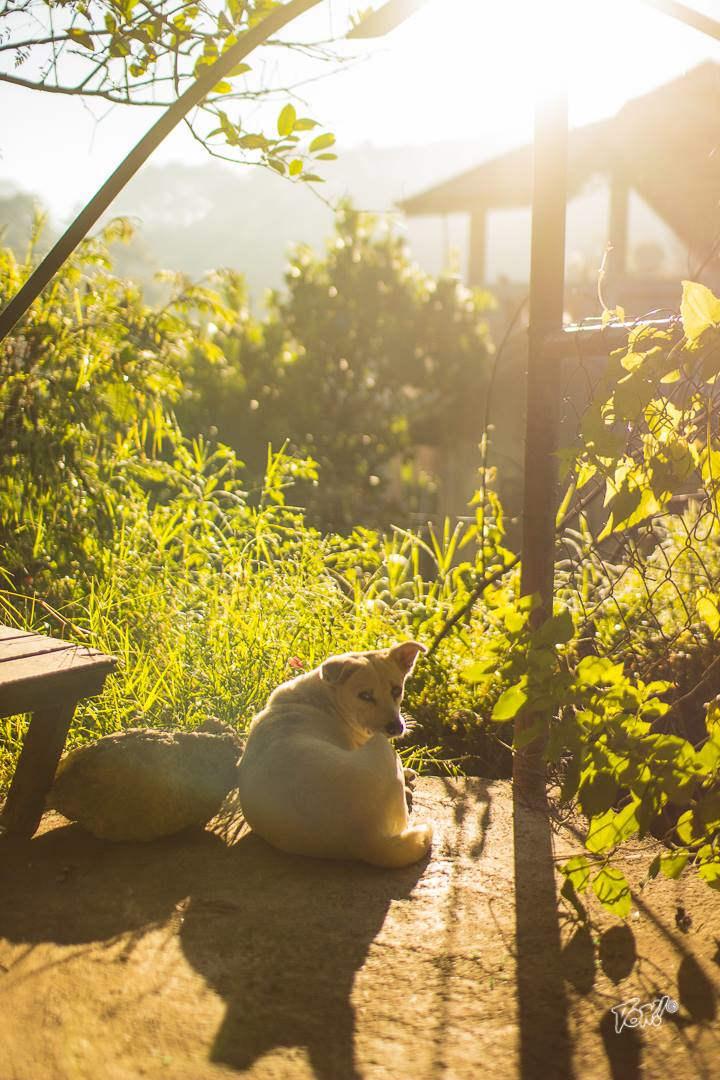 coffee farm dog.jpg