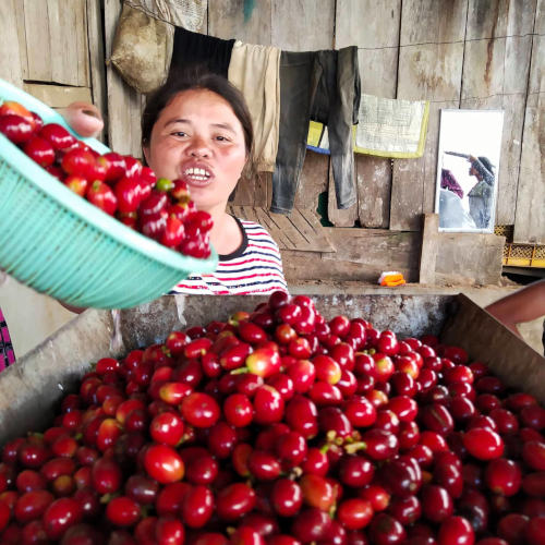 Ate Marivic Dubria presenting her coffee beans