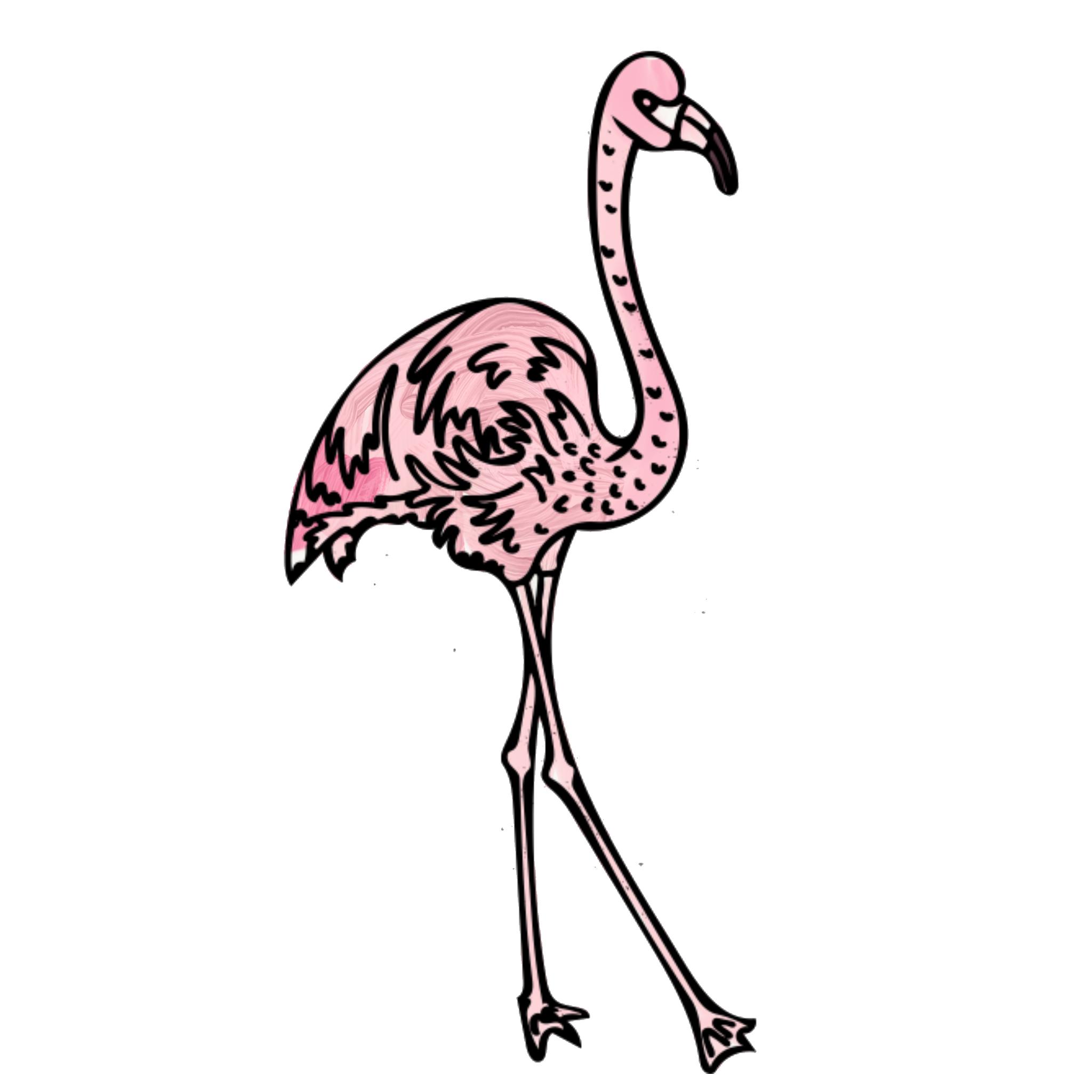 jordan_kushins_flamingo.png