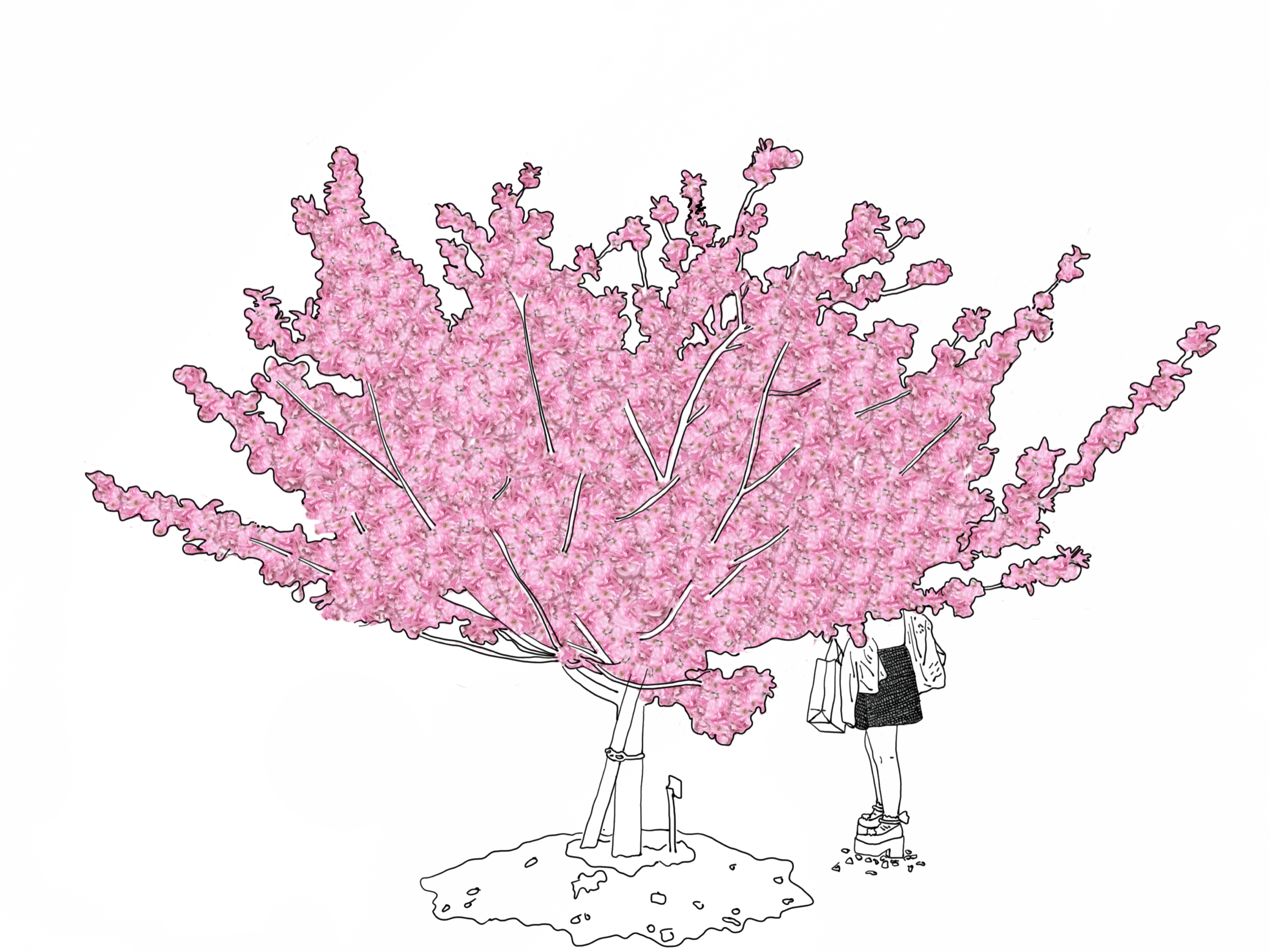 jordan_kushins_japan_kyoto_cherry_blossoms.png