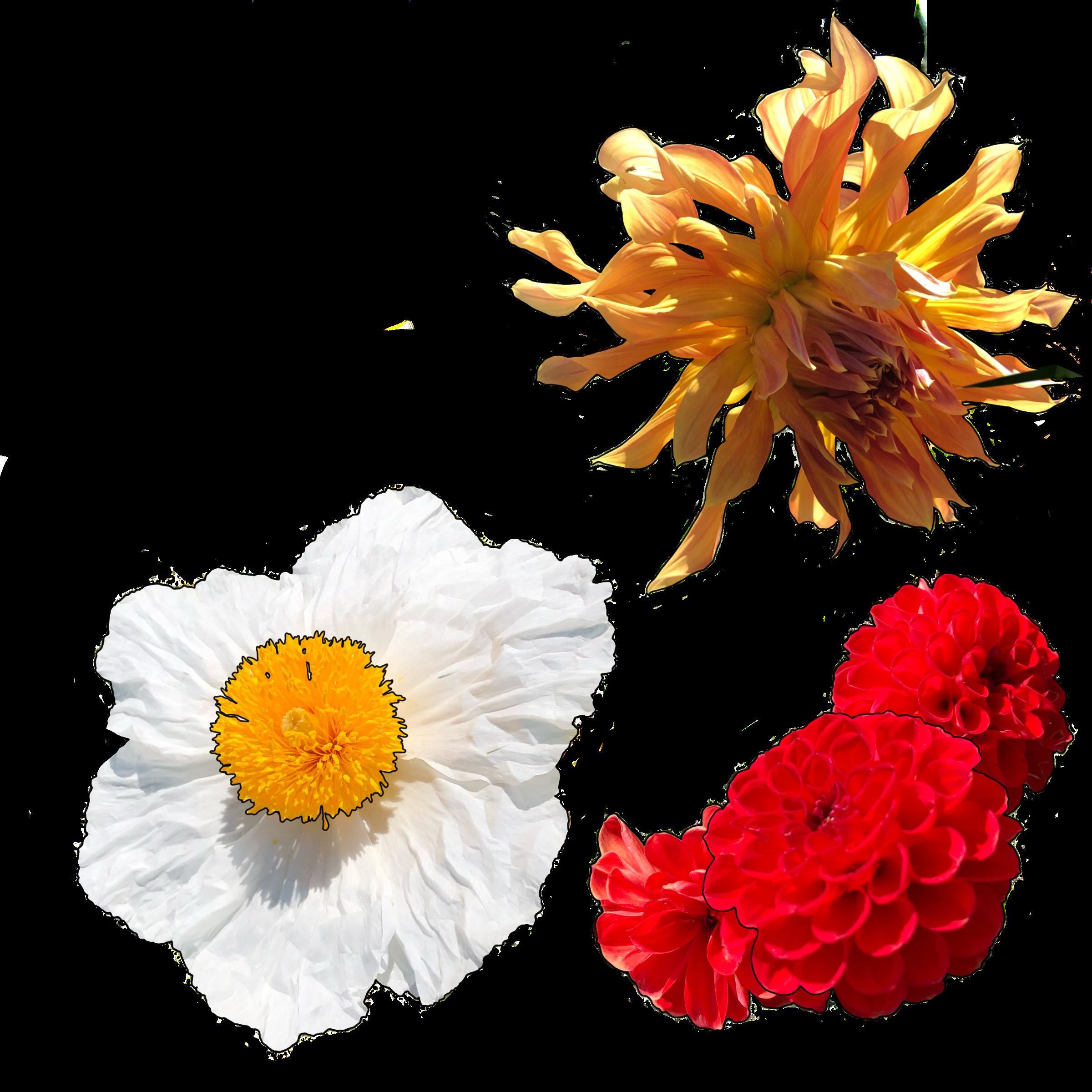 jordan_kushins_flora1.png
