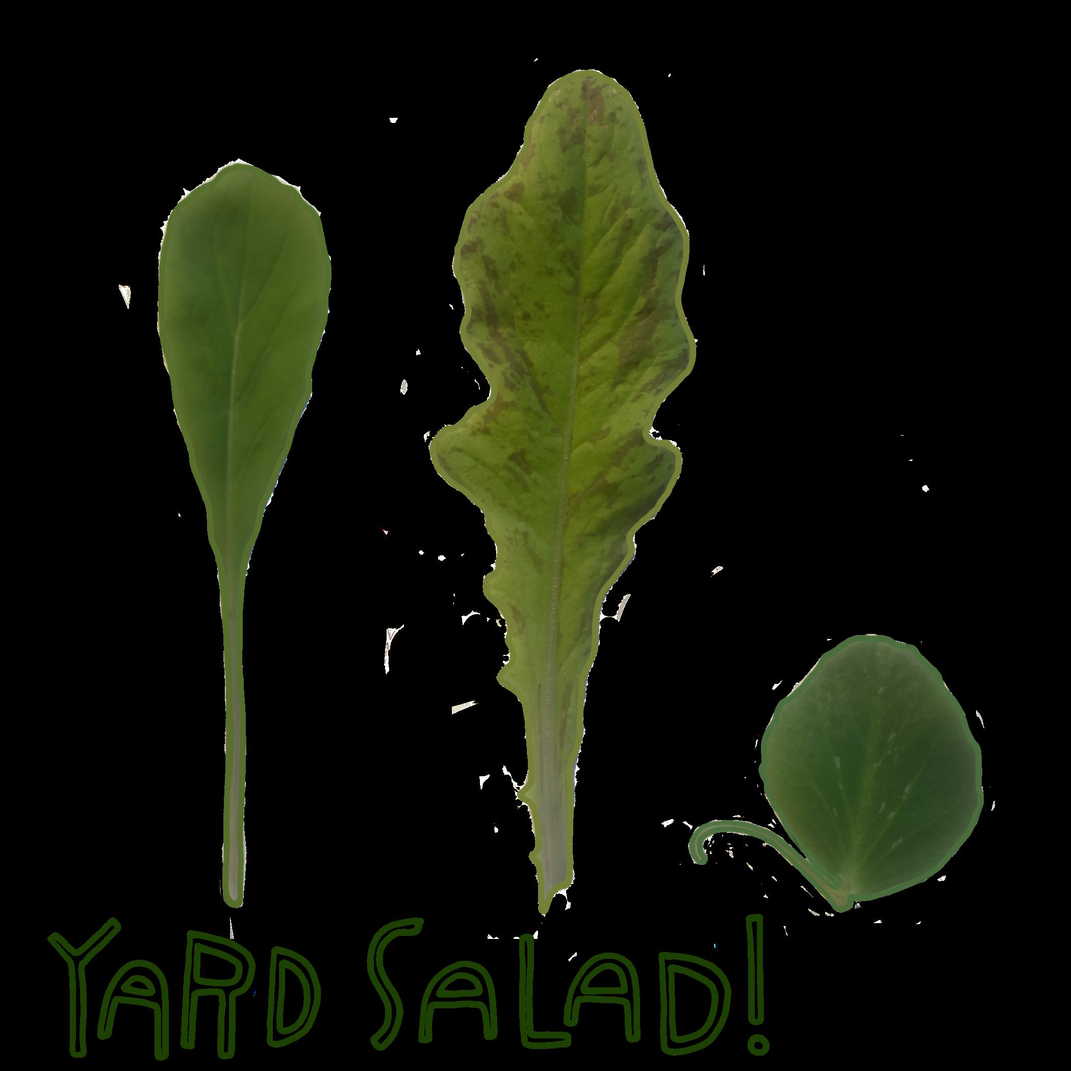 jordan_kushins_yard_salad!.png