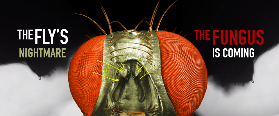 Image created for  Don't Mind If I Do: Mind-Controlling Fungus Infects, Hijacks Fly