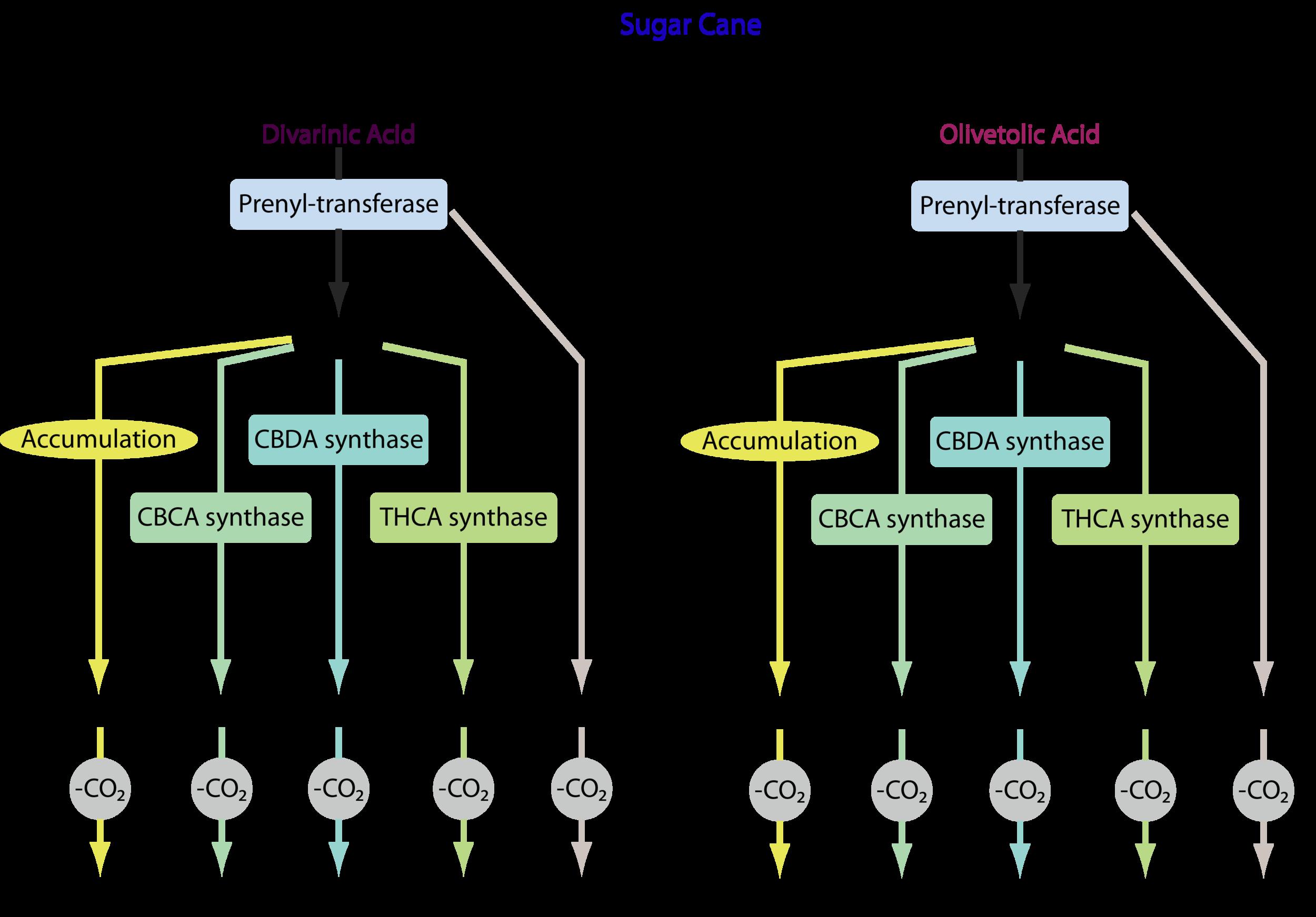 Librede Modular Cannabinoids from Sugar.png
